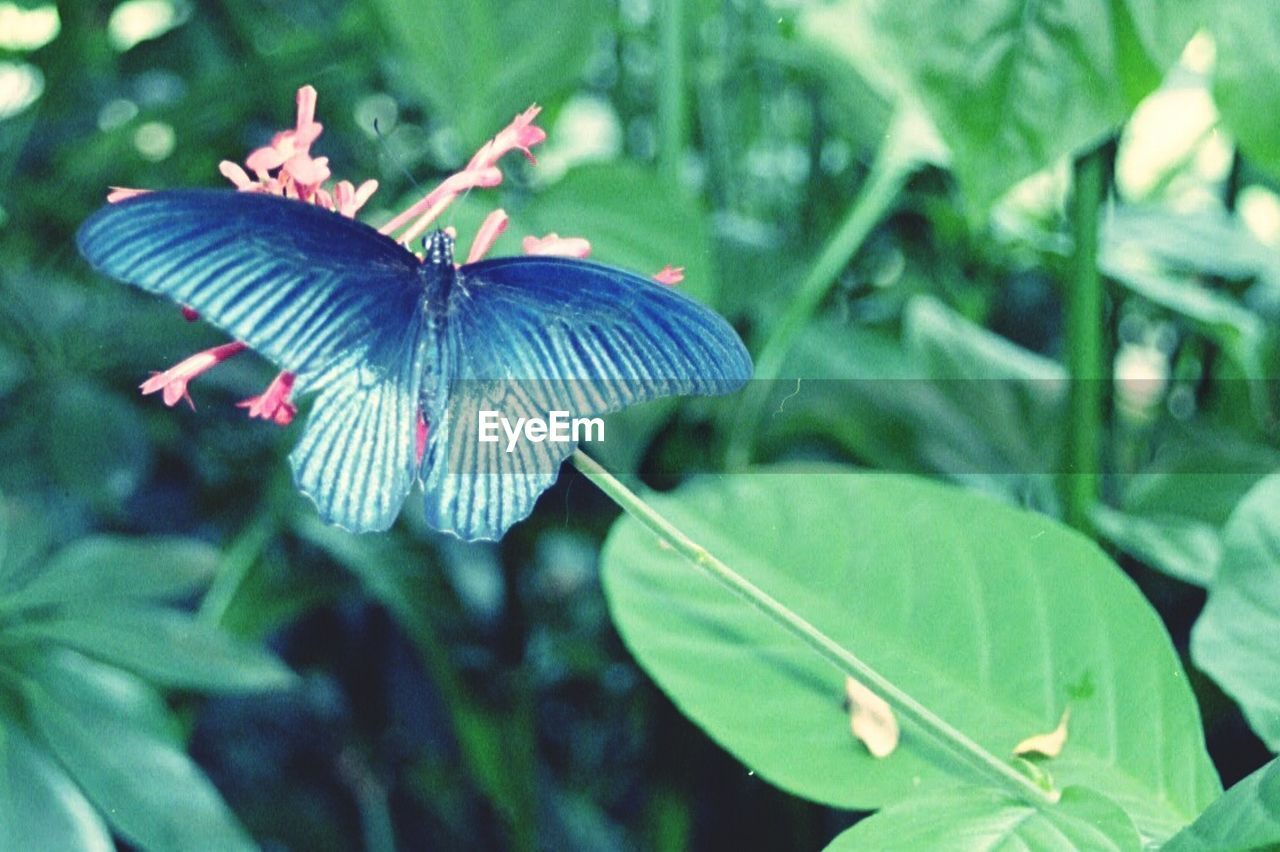 one animal, animals in the wild, animal themes, insect, nature, plant, leaf, day, growth, focus on foreground, green color, beauty in nature, outdoors, fragility, close-up, no people, butterfly - insect, flower, freshness, spread wings, flower head