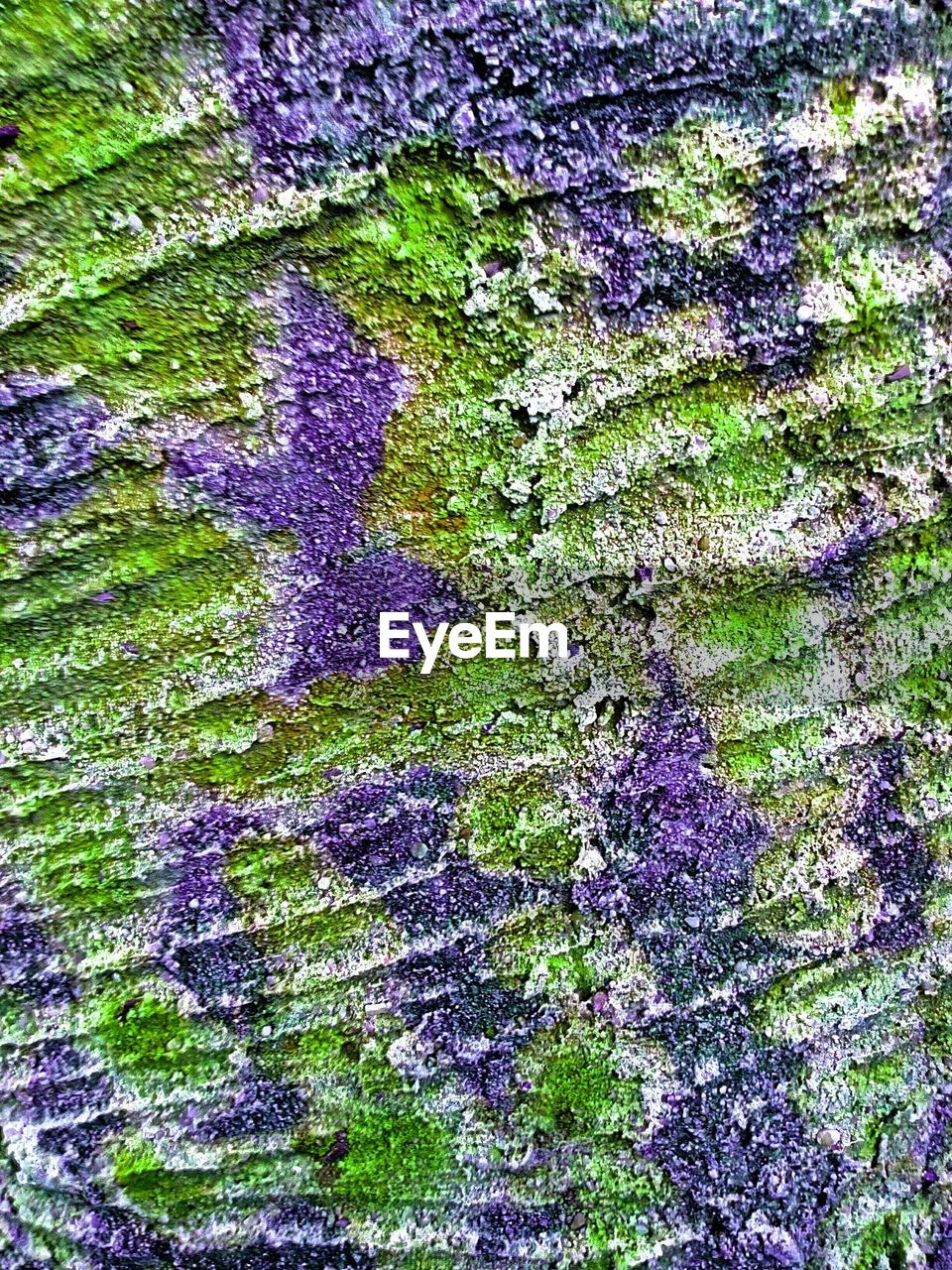 backgrounds, full frame, multi colored, textured, close-up, abstract, purple, green color, no people, outdoors, paint, day