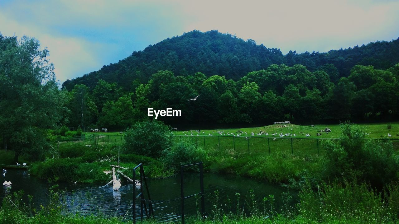 nature, water, tree, lake, growth, outdoors, beauty in nature, grass, sky, day, no people