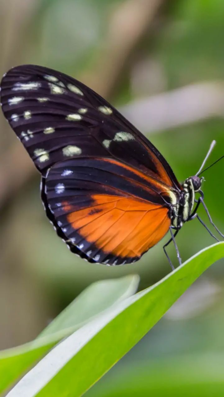 animal wildlife, invertebrate, insect, animal themes, one animal, animal, animals in the wild, close-up, animal wing, butterfly - insect, beauty in nature, focus on foreground, plant, nature, no people, leaf, plant part, green color, day, growth, butterfly, outdoors