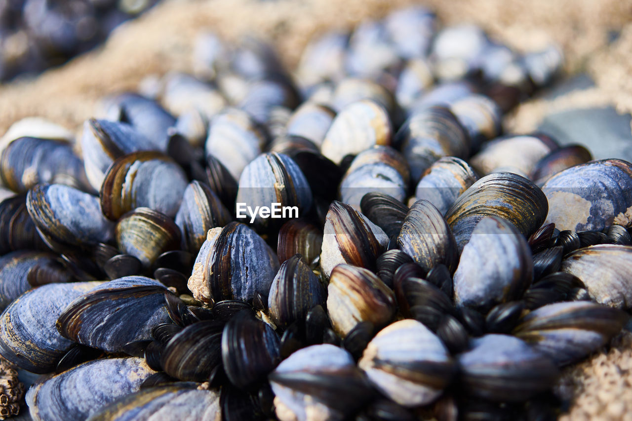 large group of objects, selective focus, food, still life, close-up, no people, food and drink, wellbeing, abundance, healthy eating, day, freshness, animal wildlife, shell, animal shell, focus on foreground, animal, full frame, pattern, outdoors