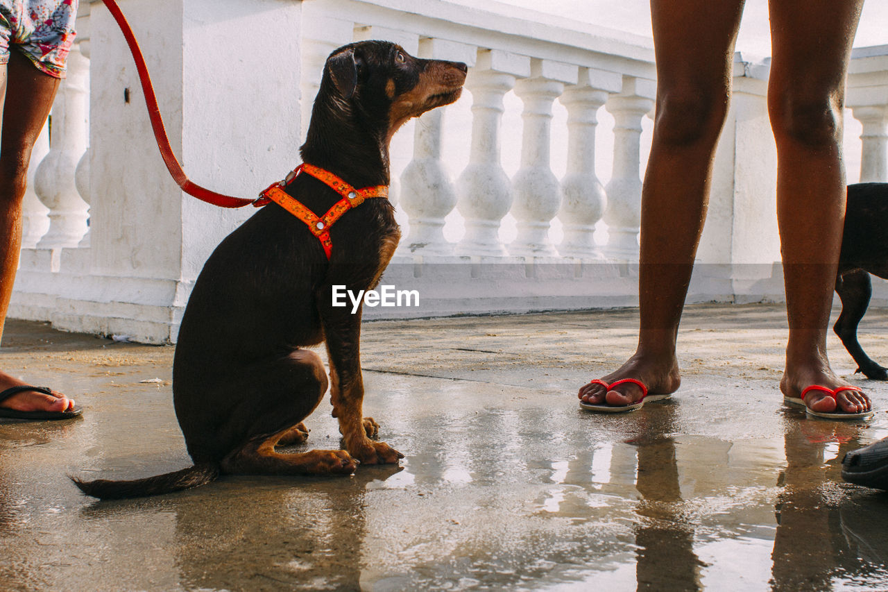 pets, domestic, mammal, one animal, domestic animals, low section, canine, human leg, dog, vertebrate, body part, standing, water, human body part, real people, day, people, wet, outdoors, rain, human foot