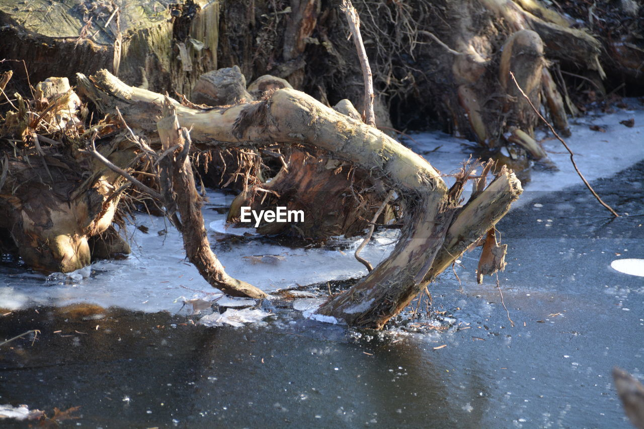 no people, day, outdoors, nature, water, dead tree, close-up, animal themes