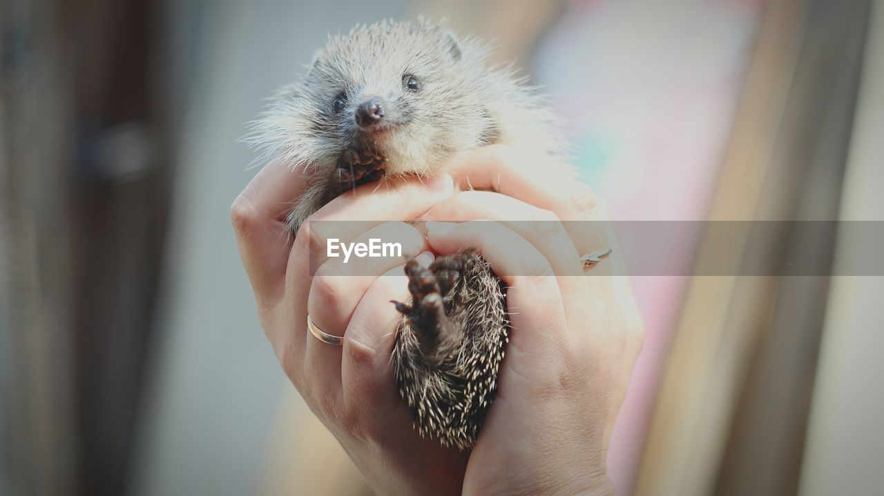 one animal, human hand, mammal, pets, hand, domestic, one person, vertebrate, domestic animals, young animal, close-up, holding, focus on foreground, human body part, real people, animal wildlife, day, finger, care, pet owner
