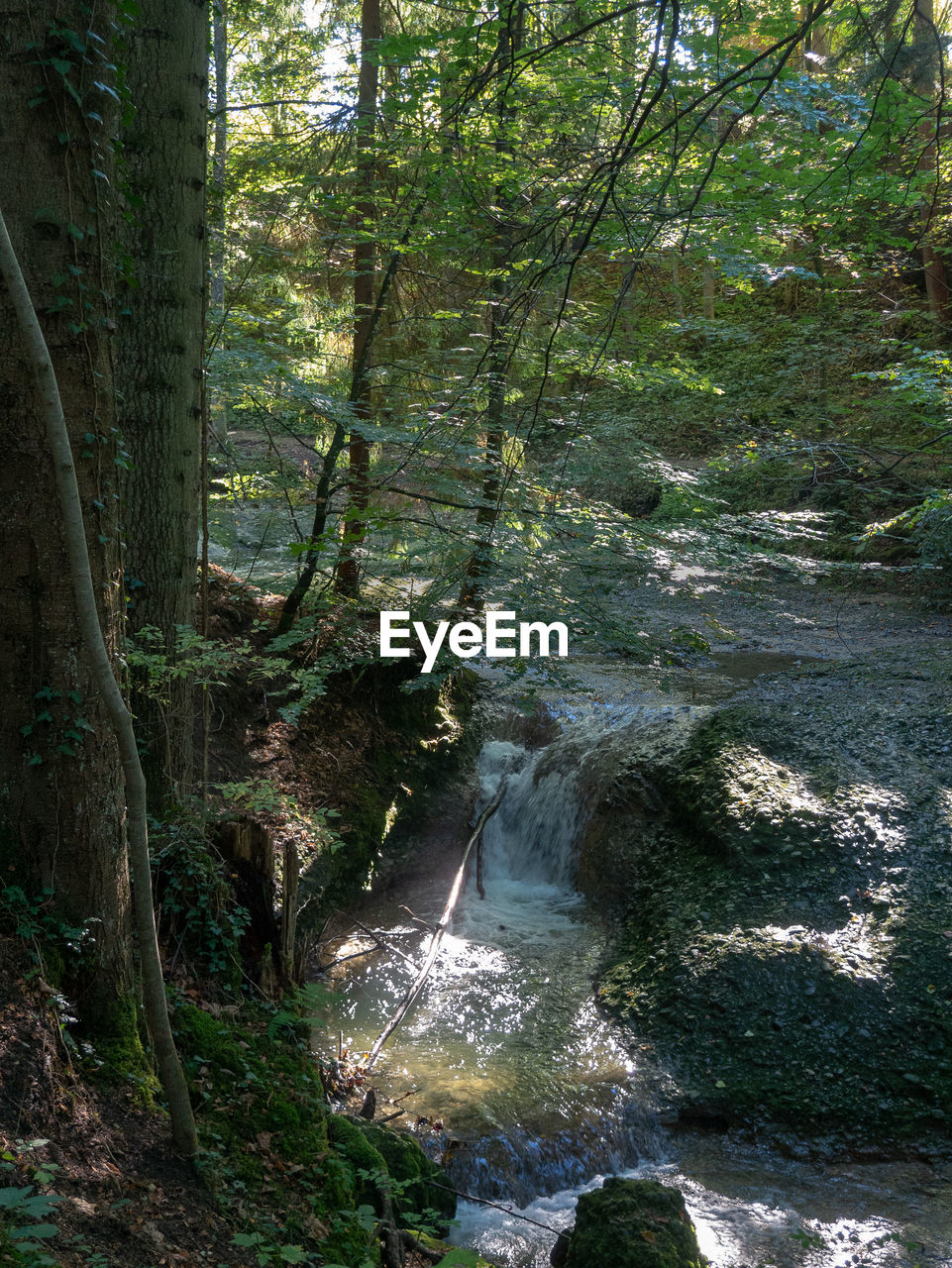 tree, forest, plant, land, water, beauty in nature, nature, growth, no people, tranquility, day, scenics - nature, motion, flowing water, non-urban scene, tranquil scene, environment, flowing, woodland, outdoors, stream - flowing water, rainforest