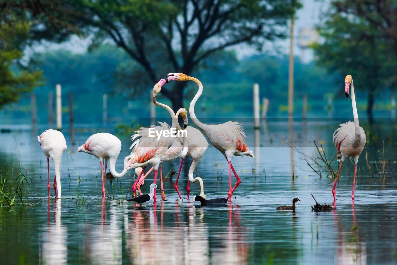 group of animals, bird, animals in the wild, vertebrate, animal themes, animal, water, animal wildlife, lake, flamingo, waterfront, day, no people, nature, reflection, tree, focus on foreground, large group of animals, beauty in nature, outdoors, freshwater bird, flock of birds, drinking, animal neck