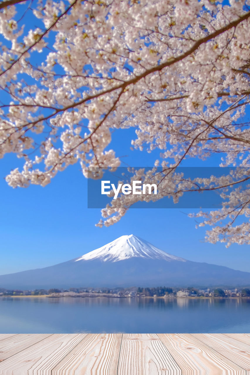 beauty in nature, tree, sky, mountain, plant, scenics - nature, nature, water, tranquility, day, blue, branch, tranquil scene, flower, cold temperature, flowering plant, blossom, no people, growth, outdoors, springtime, snowcapped mountain, cherry blossom