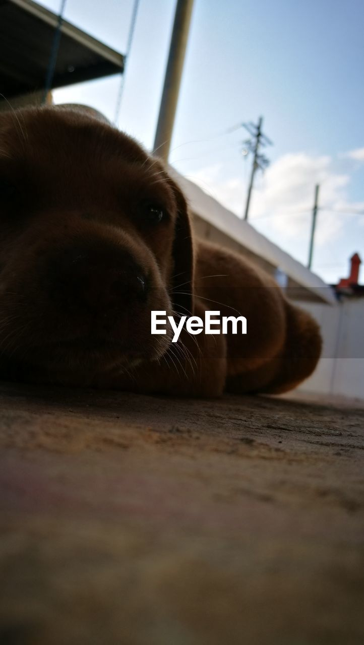 one animal, pets, domestic animals, dog, animal themes, mammal, close-up, indoors, no people, lying down, day, sky