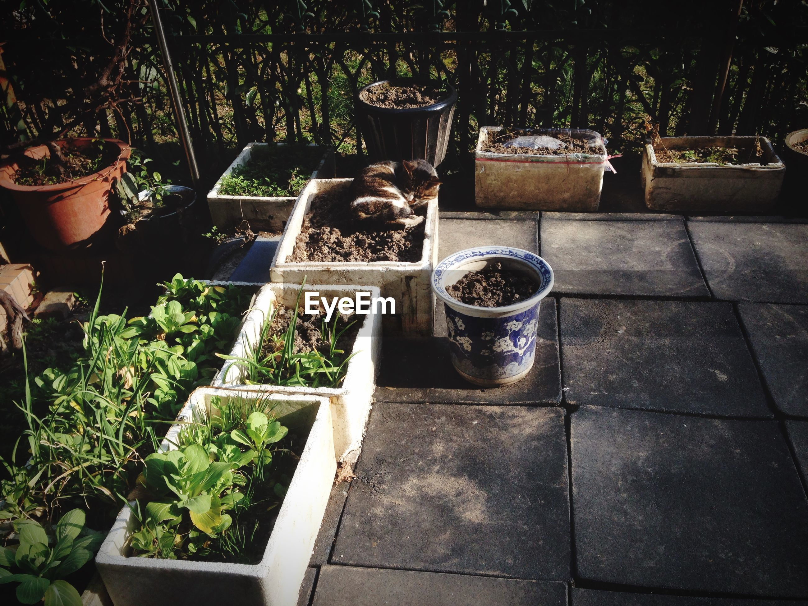 plant, potted plant, growth, high angle view, front or back yard, green color, day, outdoors, container, no people, table, chair, old, sunlight, leaf, grass, lawn, paving stone, cobblestone, formal garden