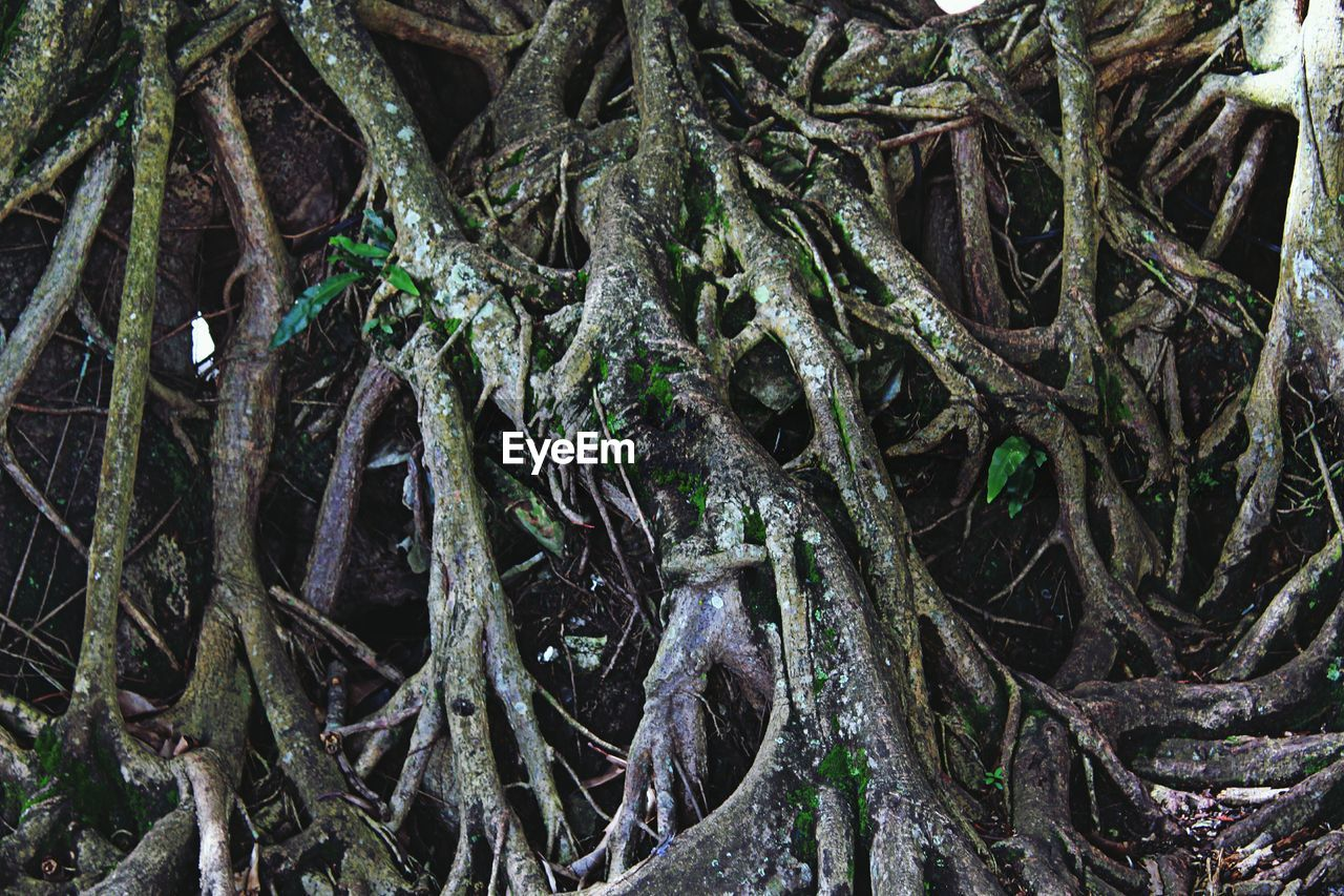 tree, root, nature, day, no people, outdoors, tree trunk, growth, green color, forest, branch, complexity, close-up, beauty in nature, dead tree