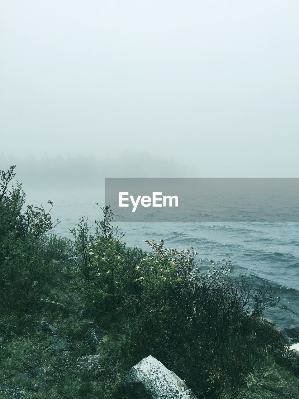 fog, nature, tranquility, tranquil scene, beauty in nature, mist, scenics, foggy, idyllic, outdoors, day, water, no people, hazy, landscape, sea, plant, tree, sky, horizon over water