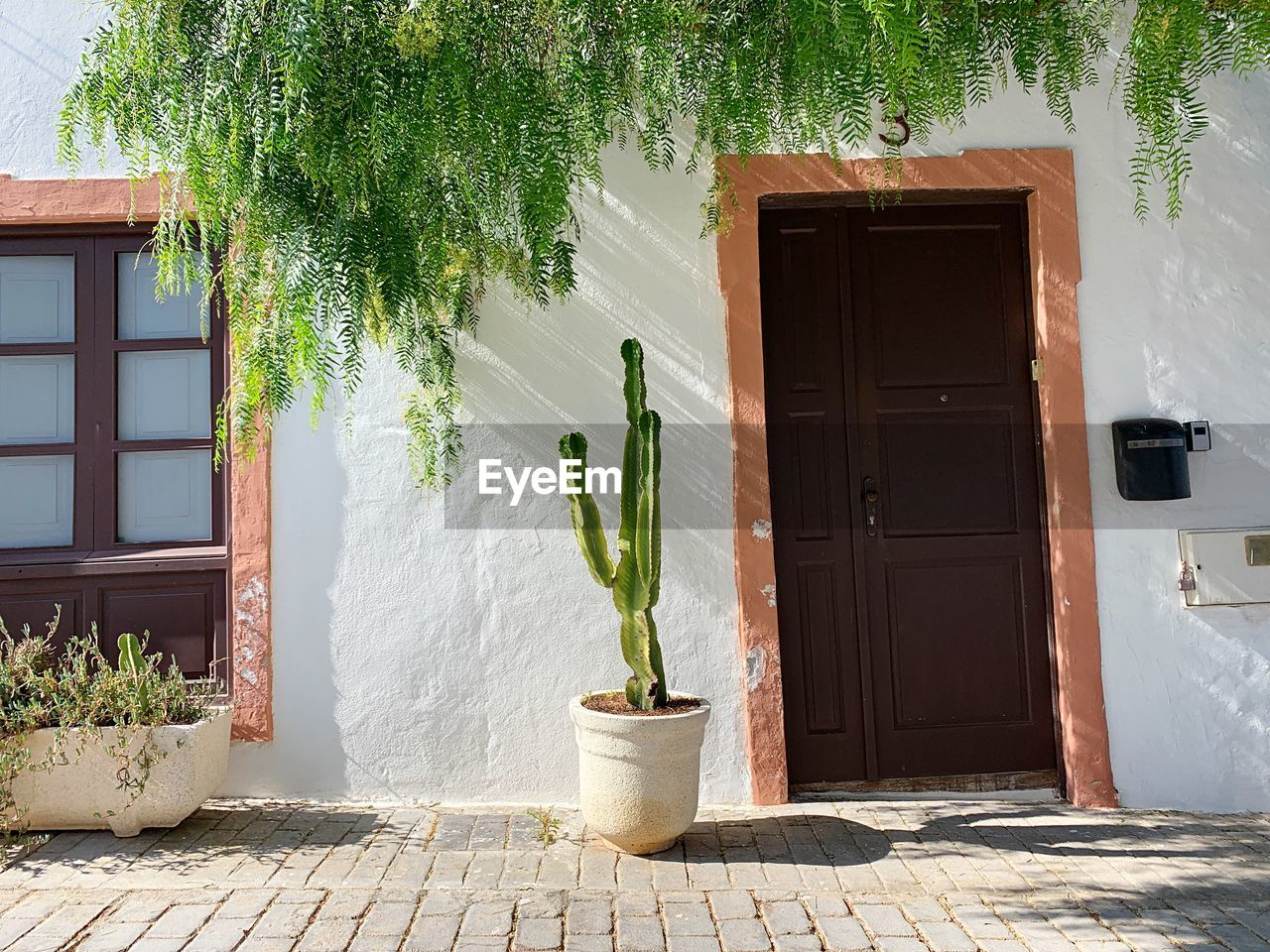plant, architecture, house, building, built structure, building exterior, entrance, potted plant, nature, door, growth, tree, day, sunlight, outdoors, no people, residential district, window, green color, wall - building feature, flower pot, houseplant