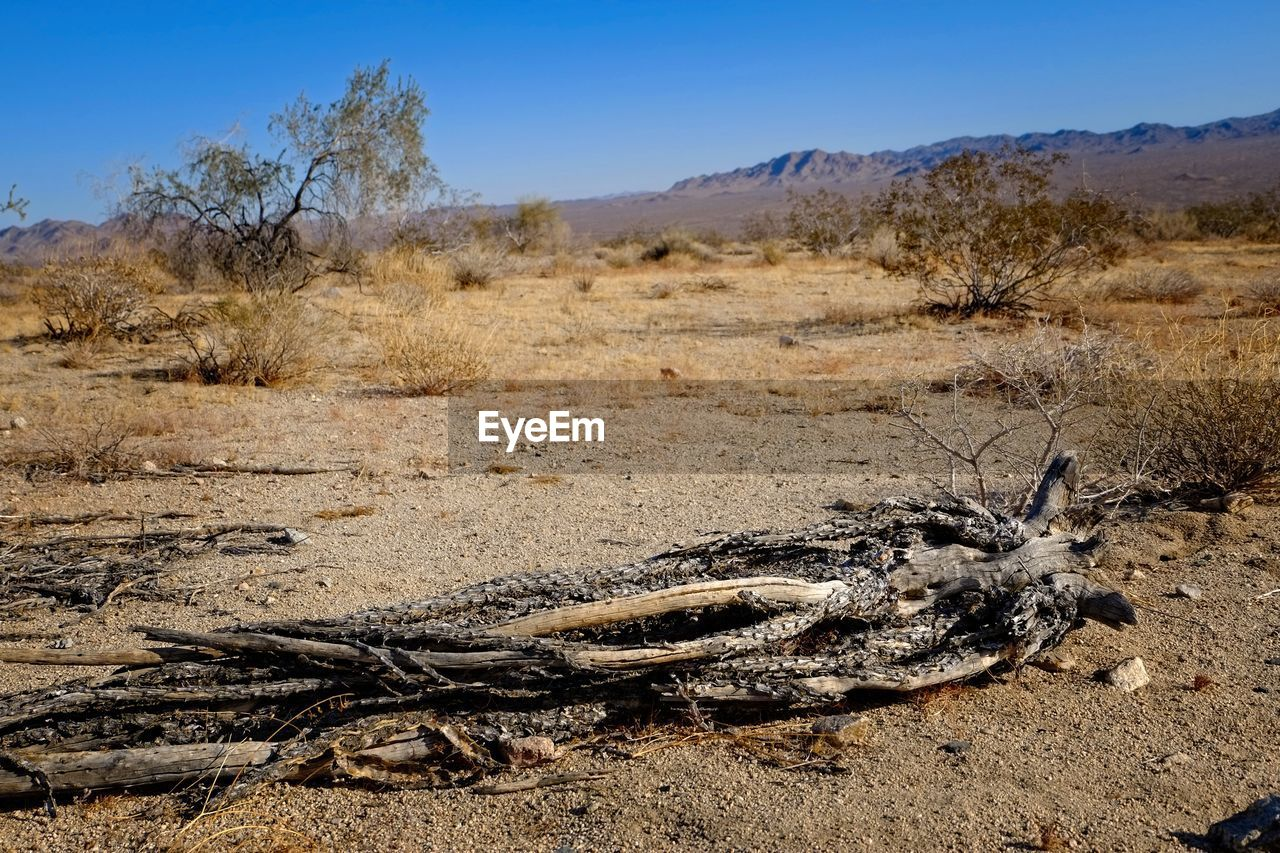 land, environment, tree, landscape, scenics - nature, sky, non-urban scene, plant, nature, no people, tranquil scene, day, tranquility, field, beauty in nature, sunlight, climate, desert, arid climate, remote, outdoors, dead plant, driftwood