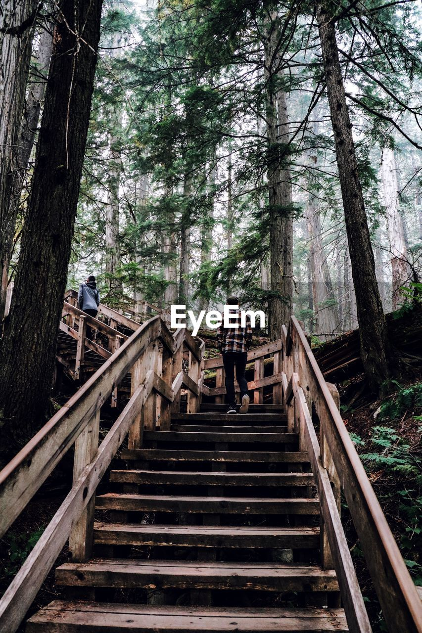 tree, staircase, forest, plant, land, architecture, nature, tree trunk, trunk, day, low angle view, built structure, railing, steps and staircases, outdoors, the way forward, growth, wood - material, woodland, direction