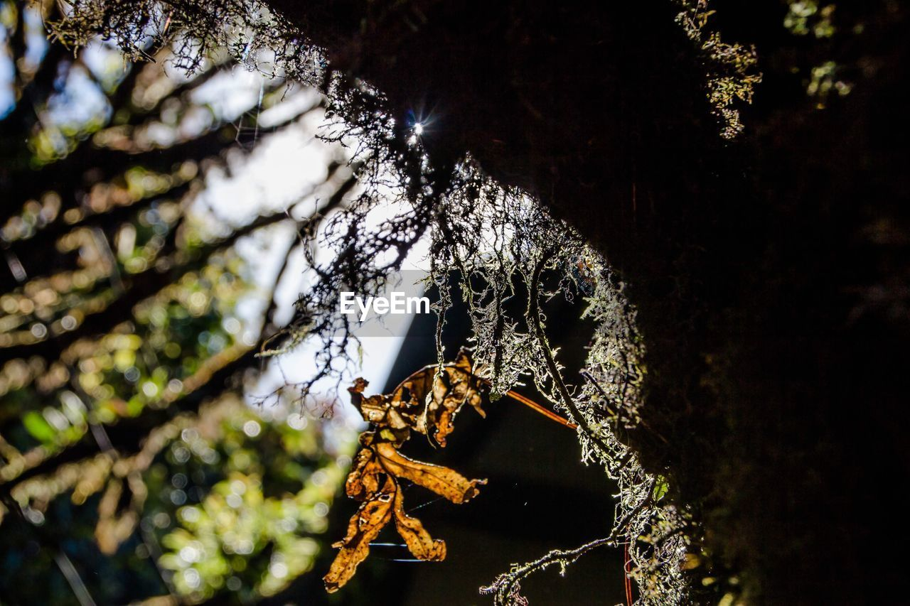 tree, one animal, animal themes, animals in the wild, animal wildlife, animal, plant, nature, close-up, no people, day, focus on foreground, tree trunk, invertebrate, trunk, arachnid, spider, outdoors, insect, zoology, animal leg