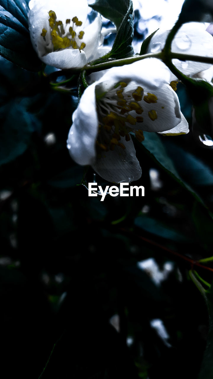 nature, flower, beauty in nature, growth, fragility, plant, water, petal, close-up, leaf, freshness, outdoors, no people, day, flower head