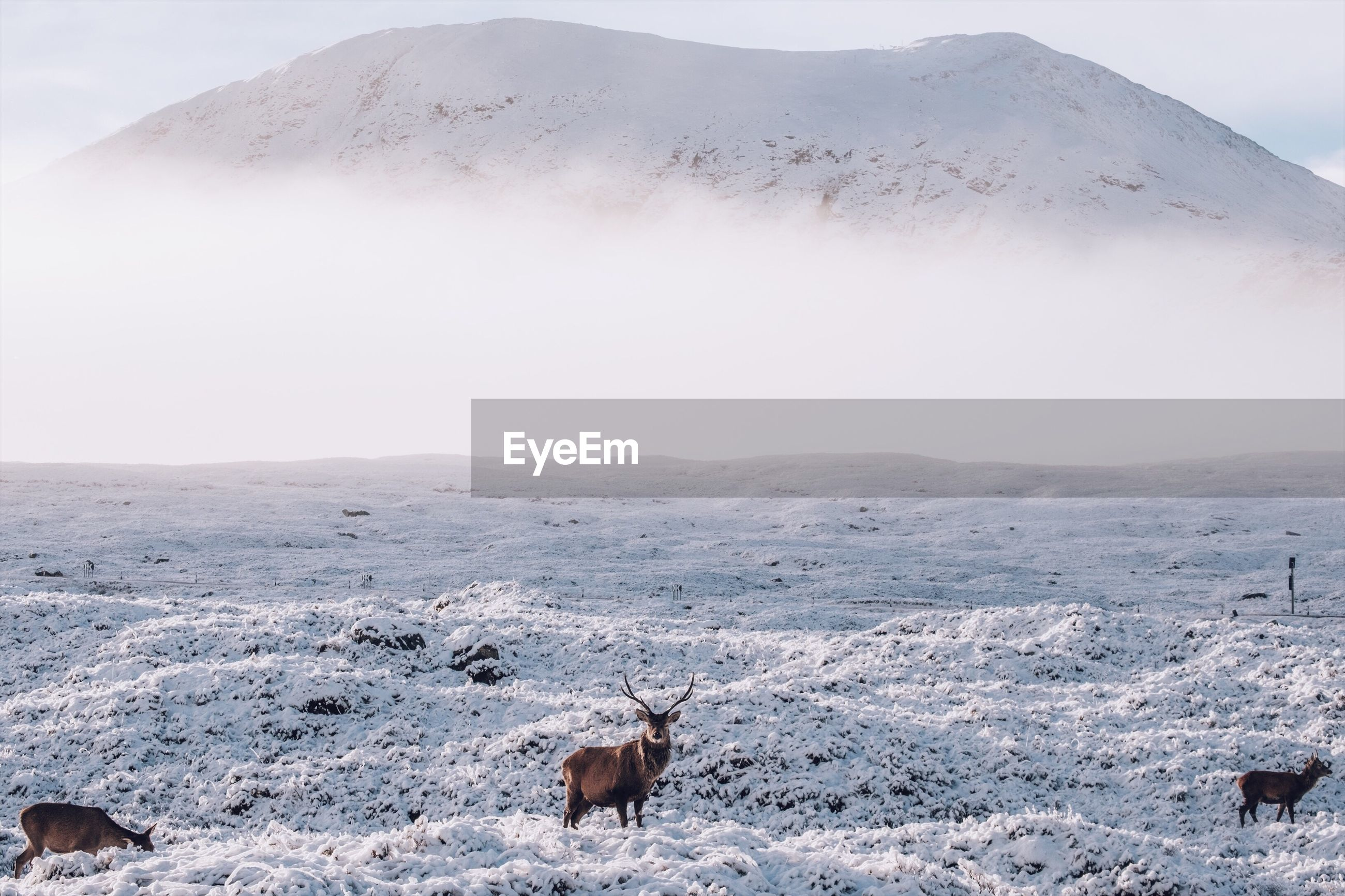 Deer on snow covered landscape against mountain