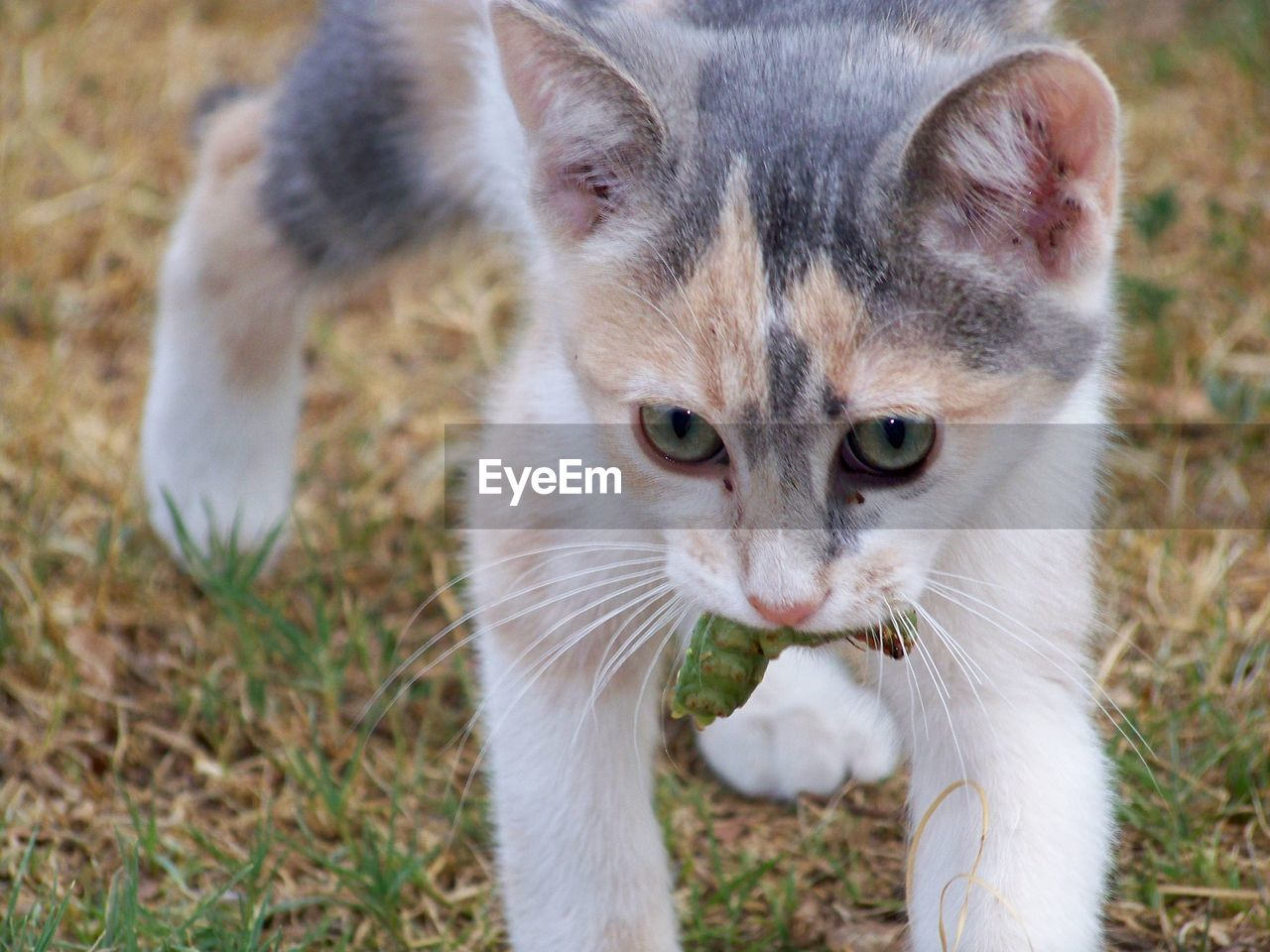 Close-up of cat carrying worm on field