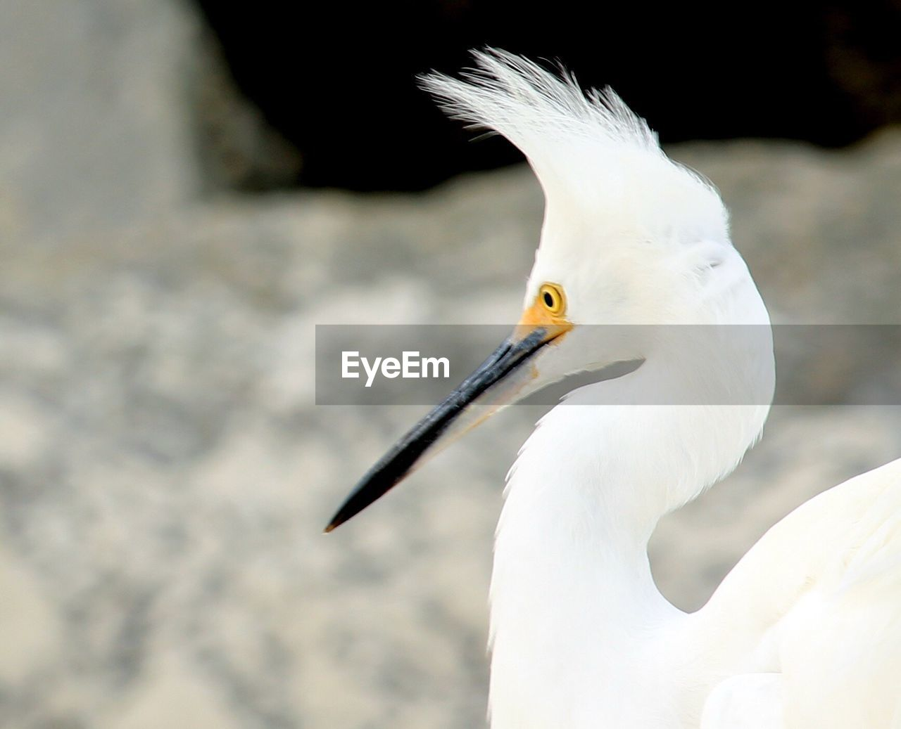 bird, one animal, animals in the wild, animal themes, animal wildlife, beak, white color, day, focus on foreground, nature, heron, outdoors, close-up, beauty in nature, no people, crane - bird