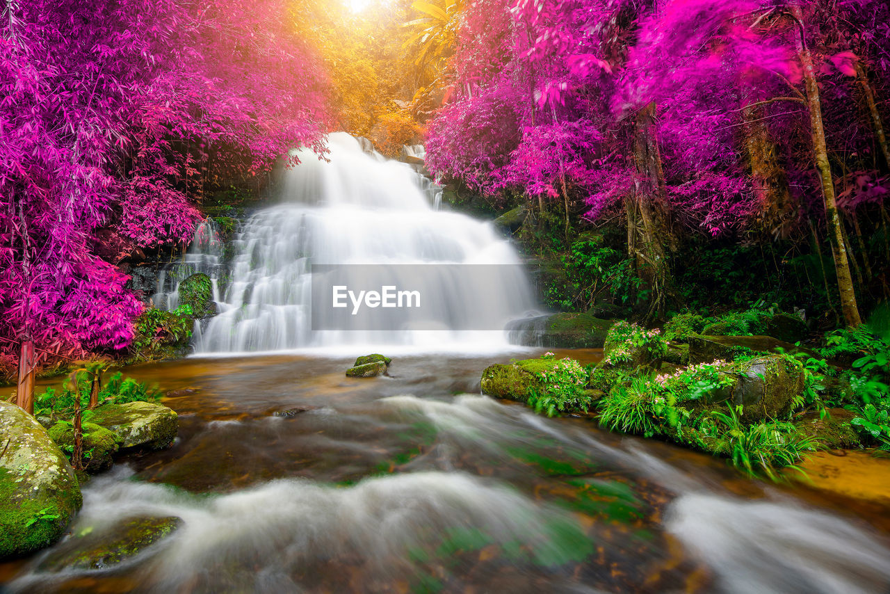 motion, waterfall, beauty in nature, water, plant, long exposure, flowing water, tree, blurred motion, scenics - nature, flowing, nature, no people, rock, growth, rock - object, forest, solid, river, outdoors, rainforest, power in nature, purple
