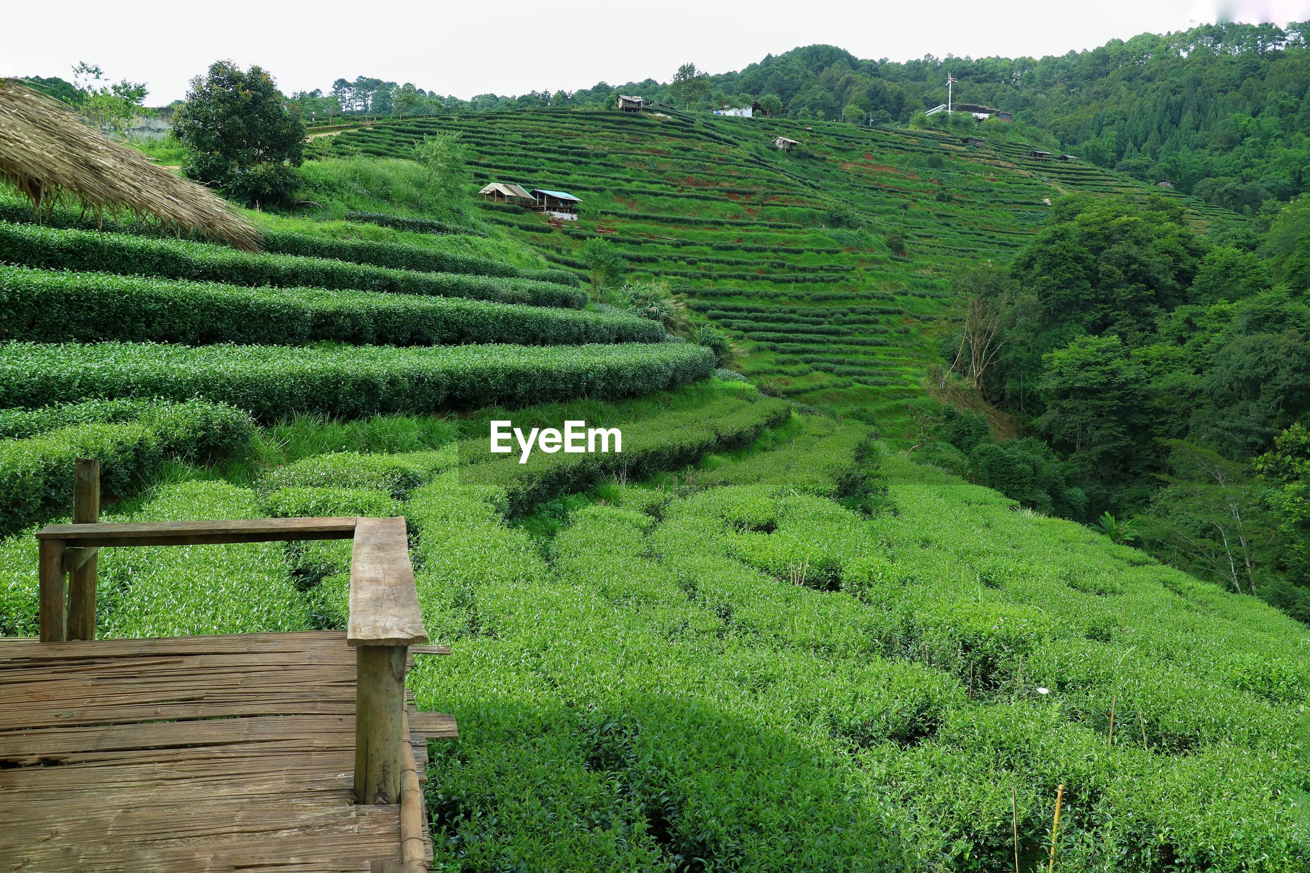 Scenic view of agricultural field. landscape of tea plantation valley with view point.