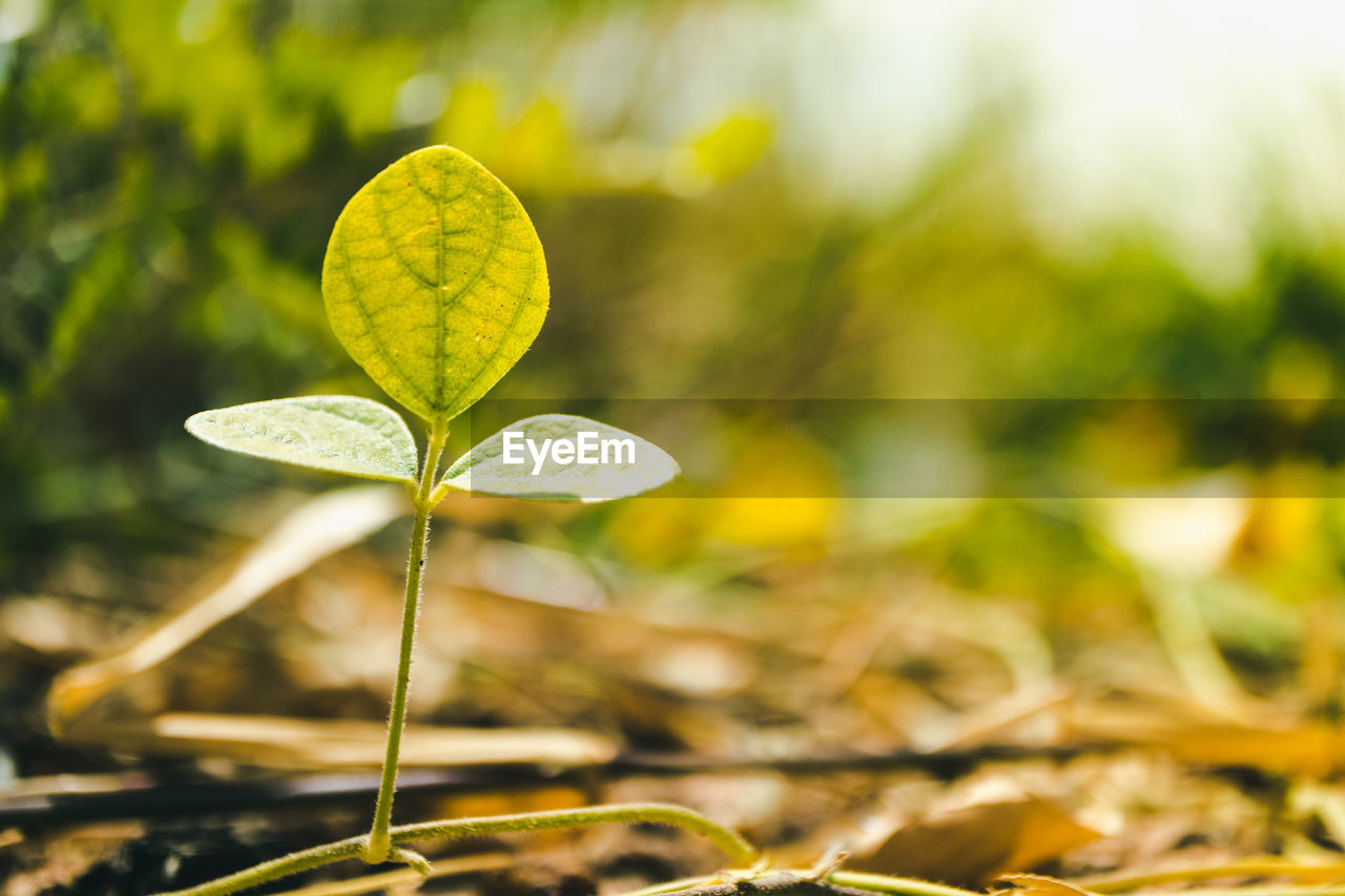 leaf, growth, nature, fragility, beauty in nature, close-up, plant, green color, day, focus on foreground, no people, freshness, outdoors
