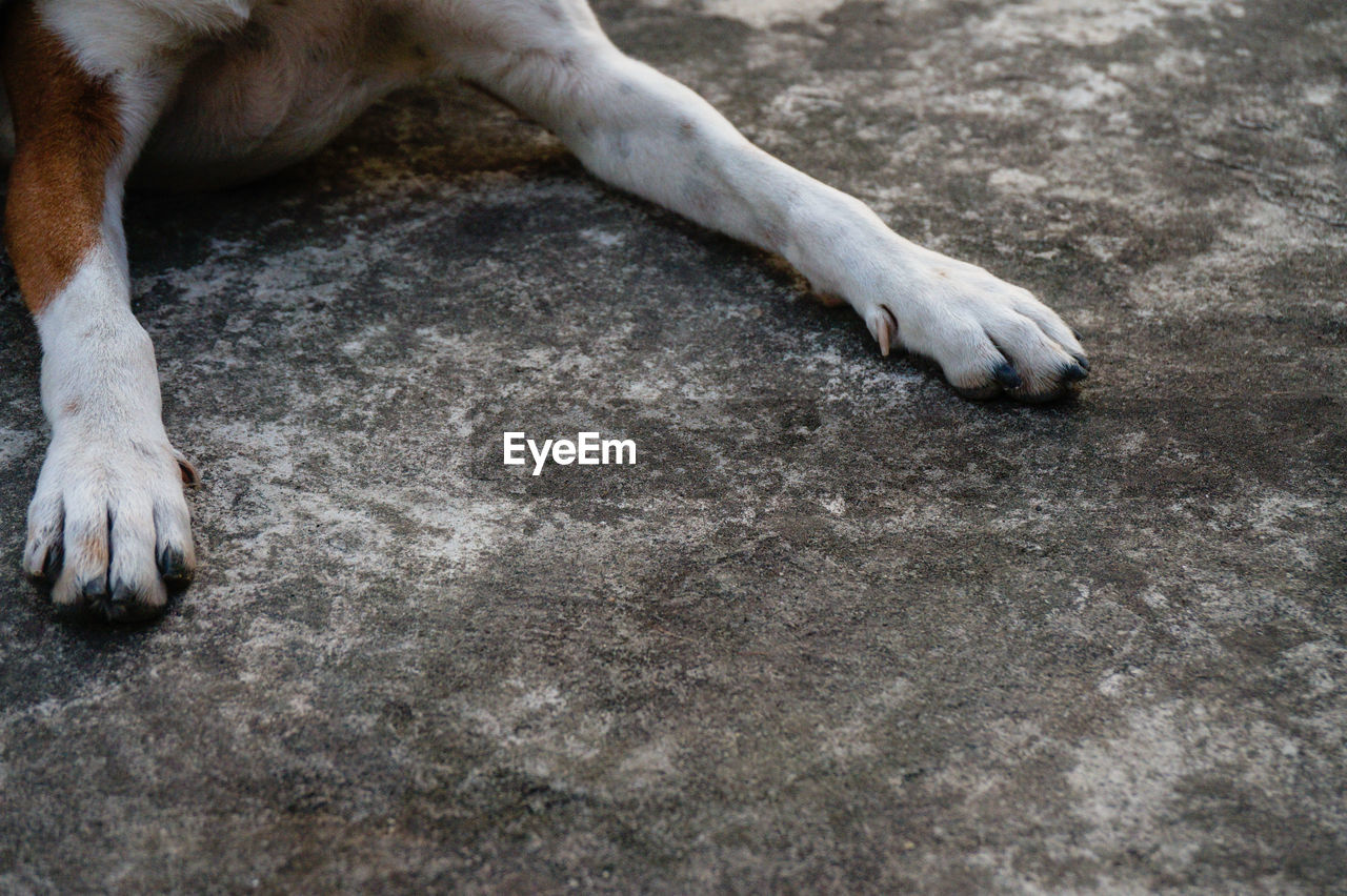 Cropped Image Of Dog Lying On Road