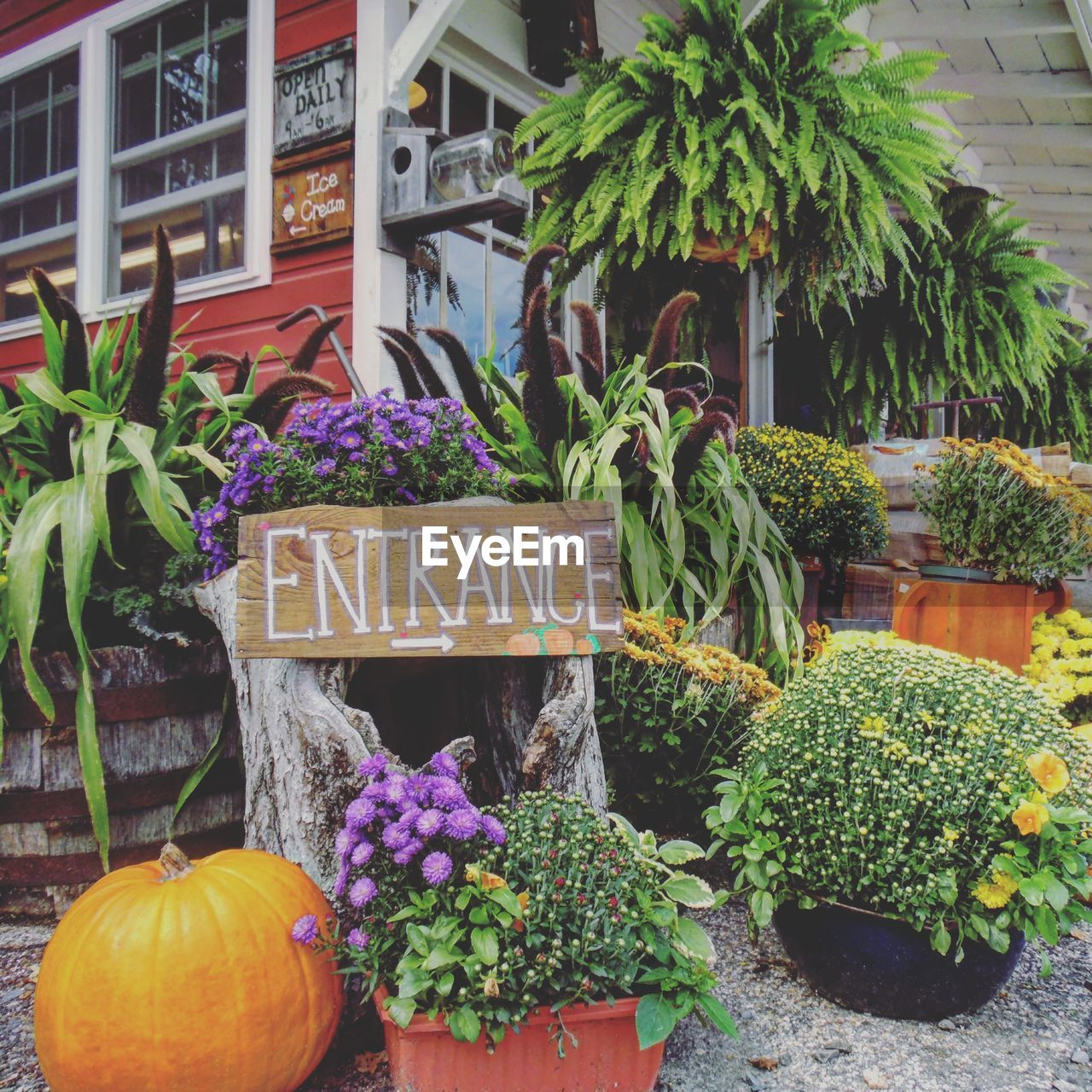 text, plant, pumpkin, potted plant, flower, growth, day, outdoors, vegetable, no people, freshness, building exterior, built structure, price tag, architecture, halloween, nature, close-up