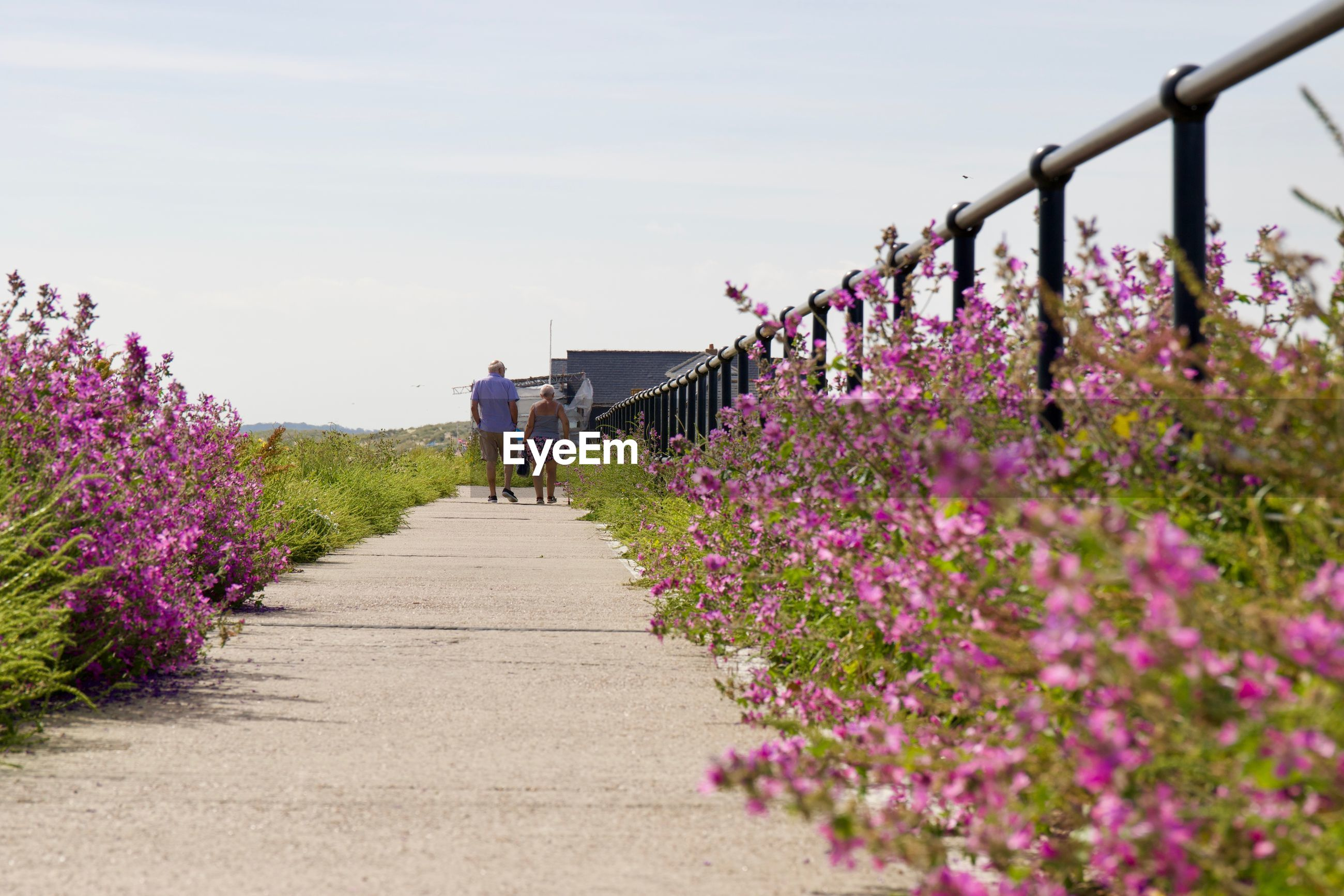 Rear view of senior man and woman walking on footpath by flowering plants against sky