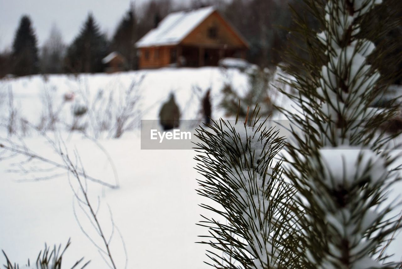 winter, snow, cold temperature, weather, house, tree, nature, building exterior, built structure, no people, outdoors, architecture, focus on foreground, day, tranquility, beauty in nature, clear sky, sky