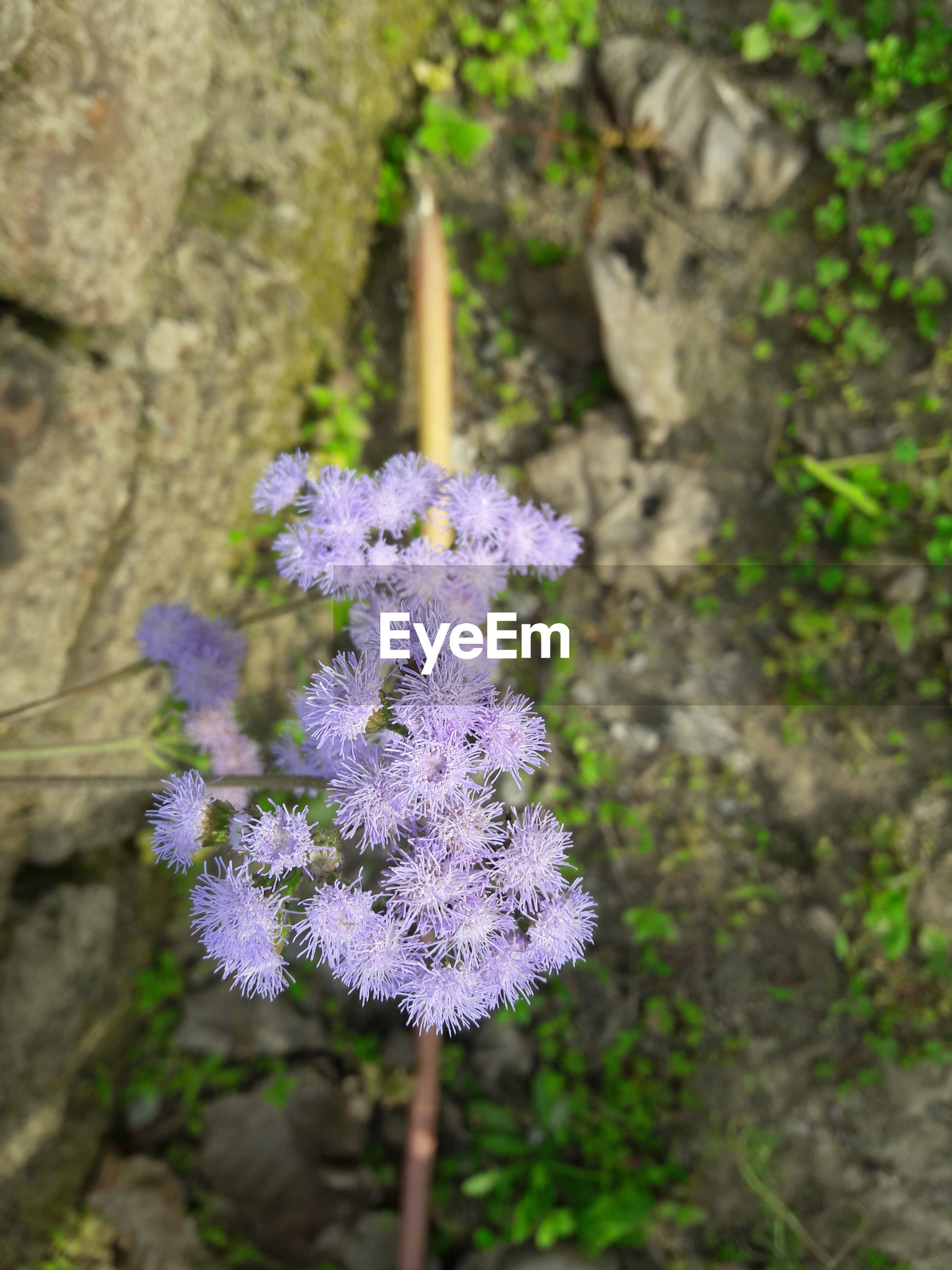 flower, purple, fragility, growth, freshness, focus on foreground, beauty in nature, nature, petal, close-up, blooming, flower head, plant, in bloom, high angle view, springtime, day, blossom, selective focus, outdoors