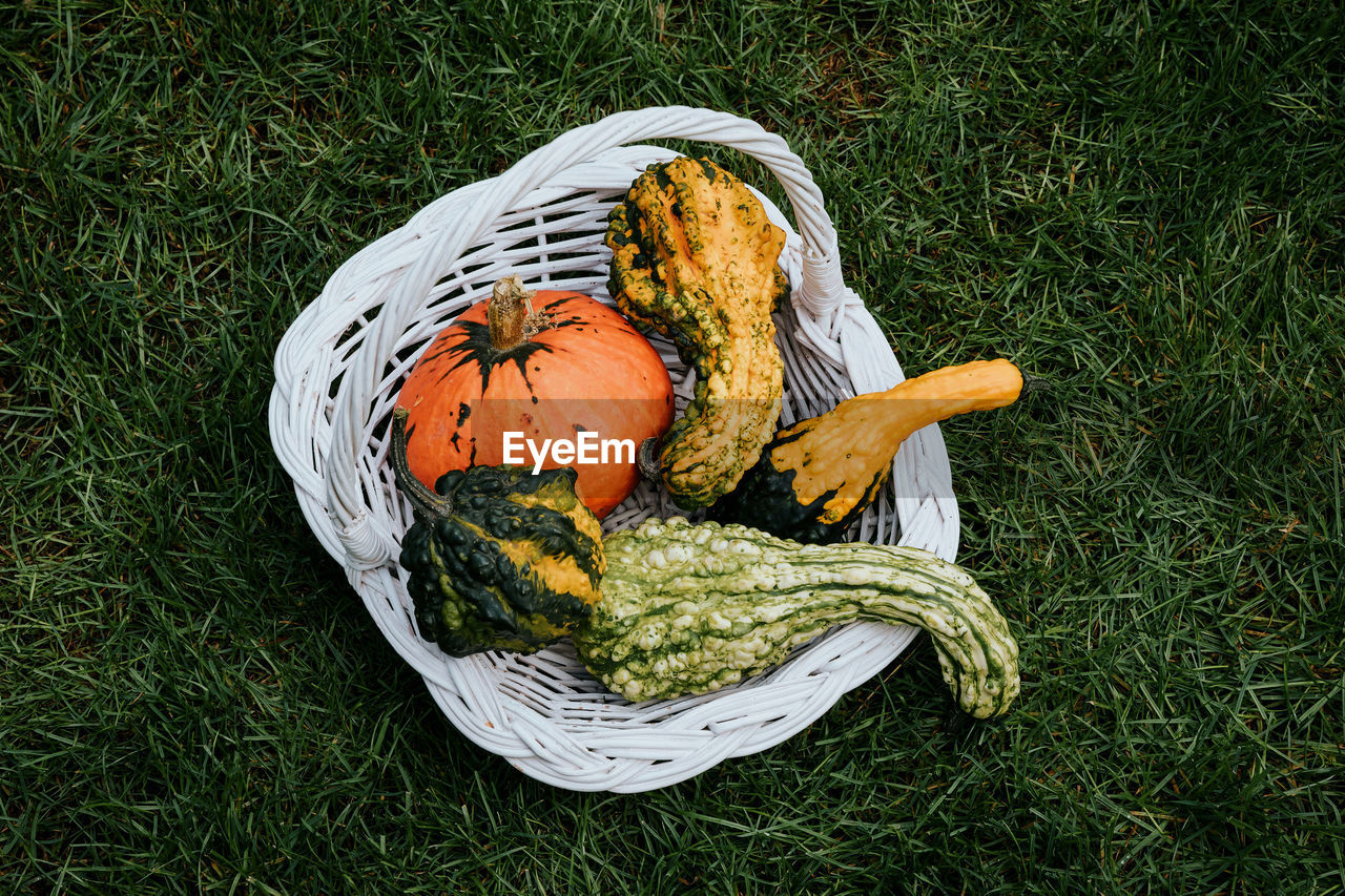 High angle view of pumpkin in basket on field