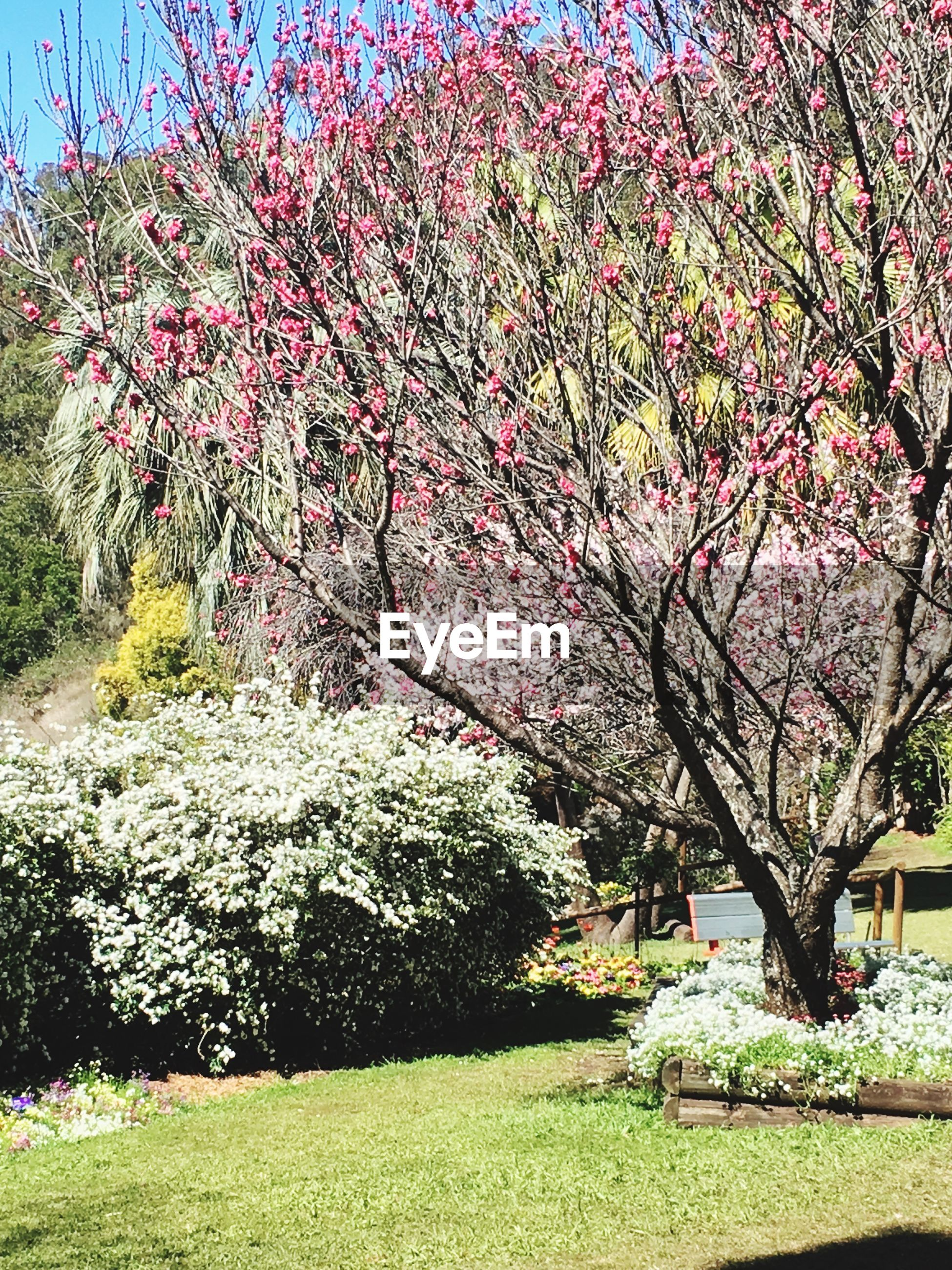 tree, growth, nature, no people, beauty in nature, outdoors, flower, day, freshness, sky, fragility, close-up
