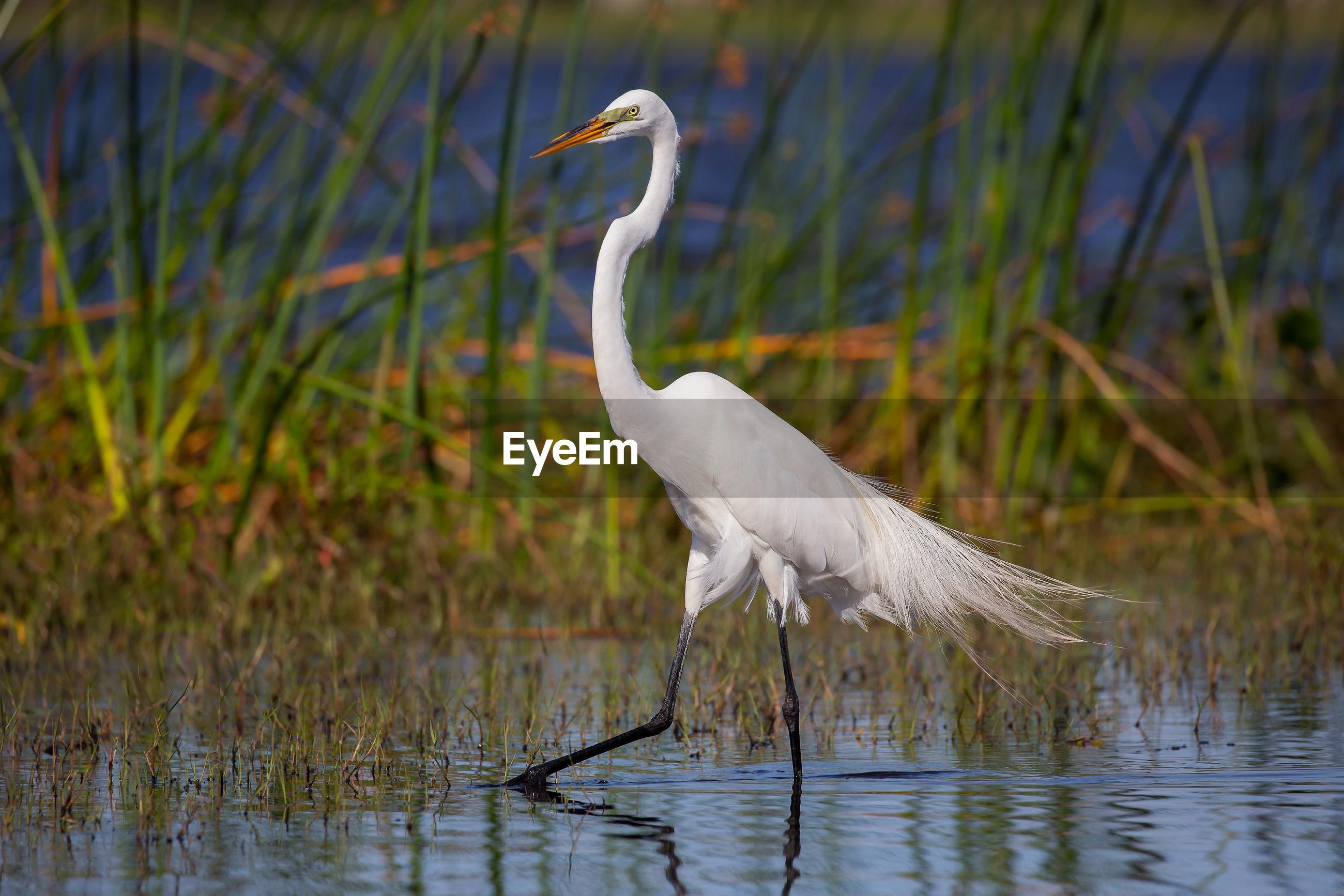Bird by grass in lake