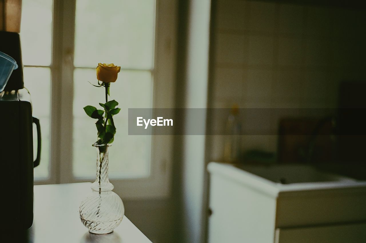flower, vase, indoors, plant, table, potted plant, focus on foreground, growth, no people, fragility, home interior, close-up, beauty in nature, nature, leaf, flower head, day, freshness