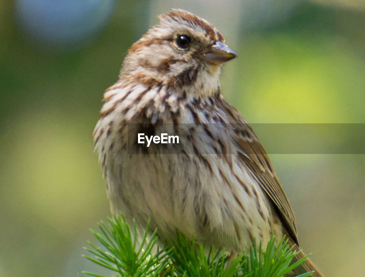 one animal, bird, animal themes, animals in the wild, focus on foreground, day, animal wildlife, close-up, nature, no people, perching, outdoors