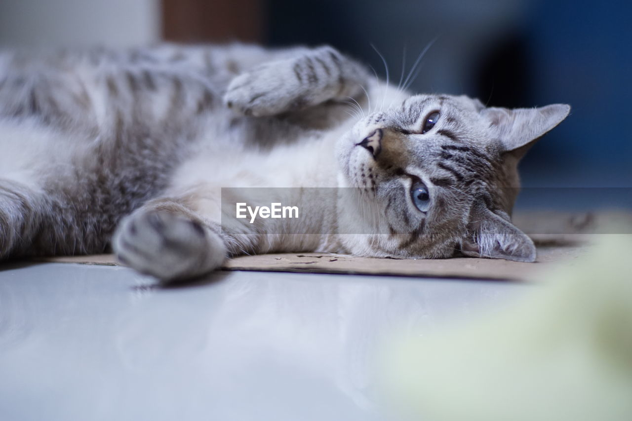 CLOSE-UP OF A CAT LYING IN THE BED