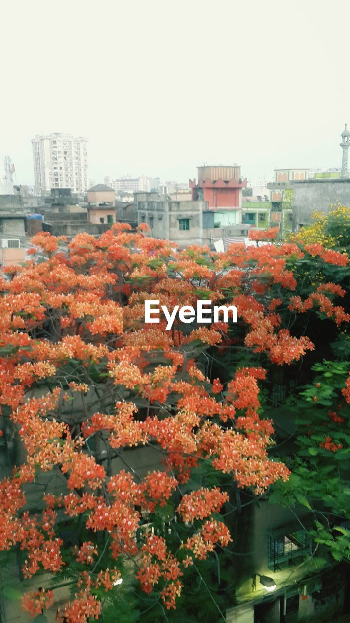 architecture, building exterior, built structure, flower, growth, city, outdoors, tree, day, no people, nature, fragility, beauty in nature, autumn, plant, leaf, freshness, skyscraper, blooming, close-up, cityscape, sky