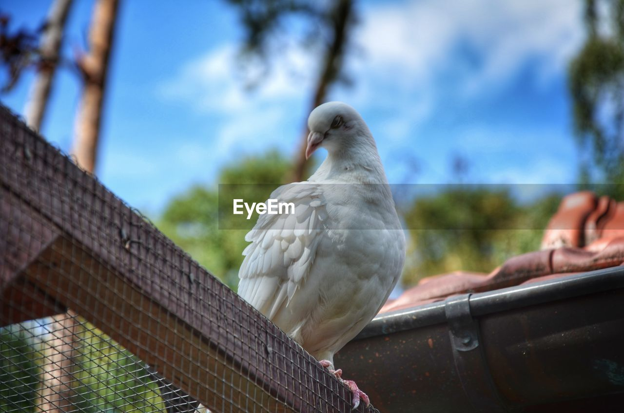 bird, vertebrate, animal, animal themes, animal wildlife, animals in the wild, one animal, perching, focus on foreground, day, low angle view, nature, dove - bird, outdoors, parrot, railing, close-up, tree, sky, architecture
