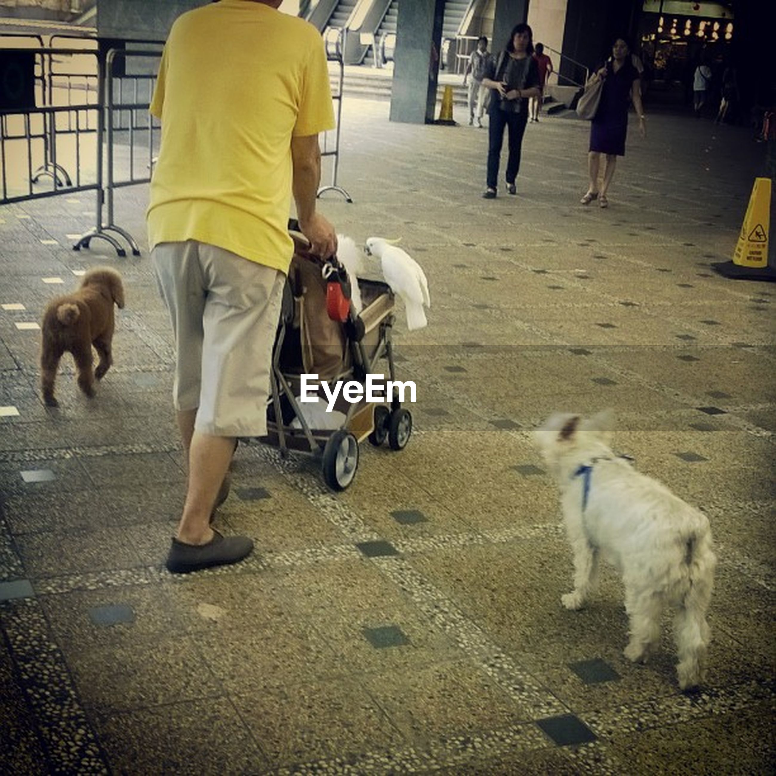 animal themes, domestic animals, mammal, street, dog, walking, men, pets, lifestyles, one animal, person, road, two animals, full length, togetherness, pet leash, leisure activity, day, outdoors