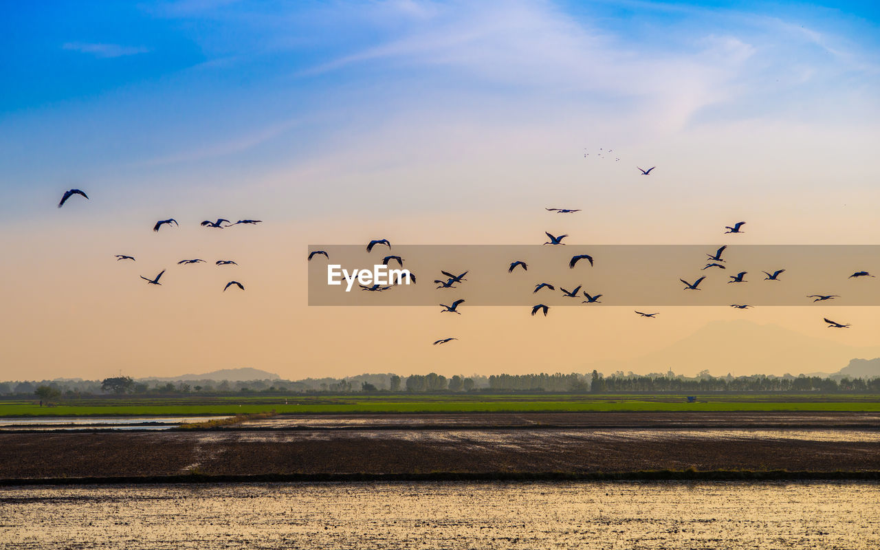 large group of animals, flying, bird, flock of birds, animals in the wild, animal themes, sky, migrating, nature, mid-air, animal wildlife, sunset, beauty in nature, no people, outdoors, scenics, landscape, togetherness, day