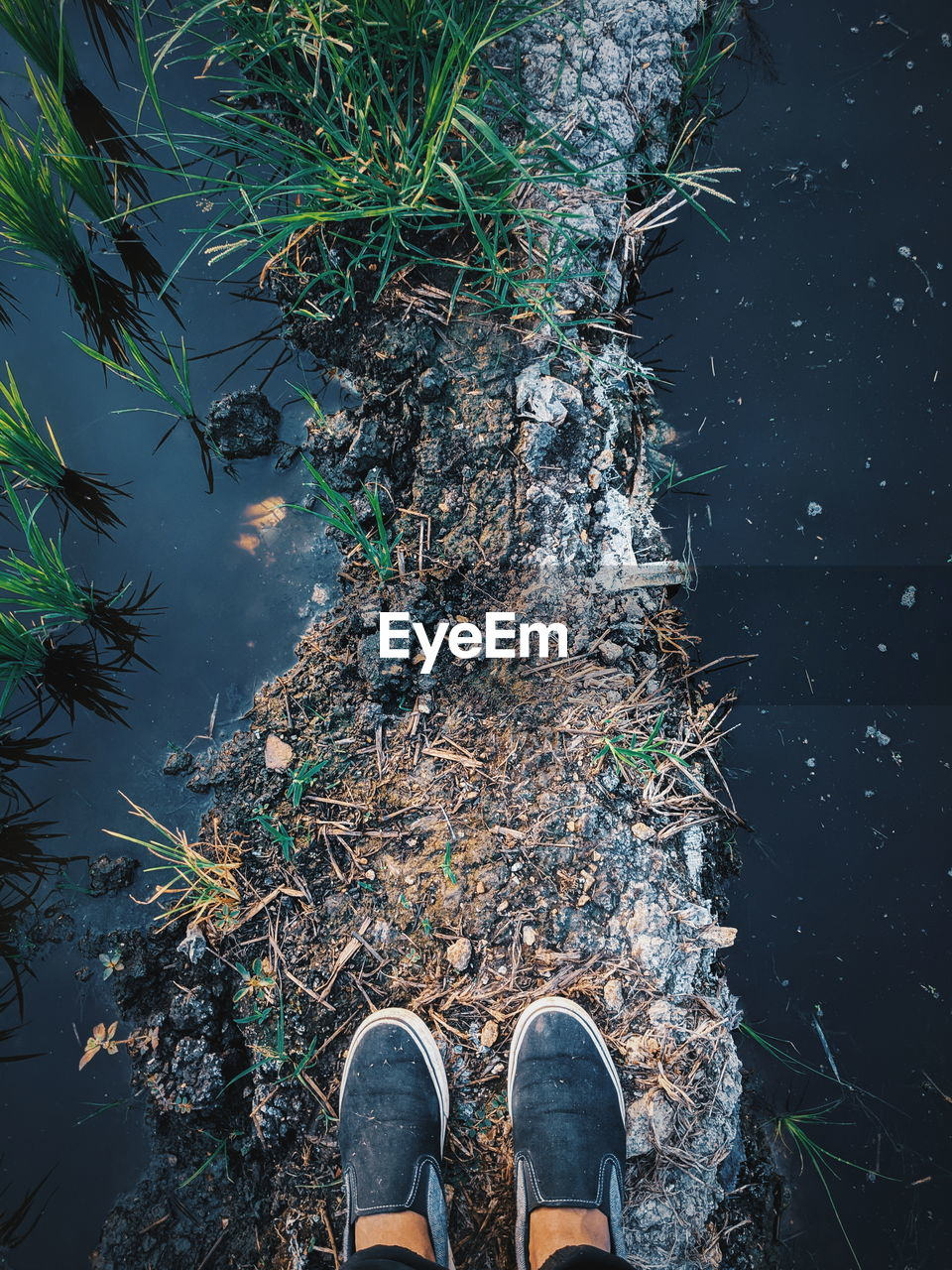 low section, human body part, human leg, one person, body part, water, nature, shoe, standing, real people, day, lifestyles, plant, high angle view, personal perspective, unrecognizable person, leisure activity, lake, outdoors, human foot, shallow