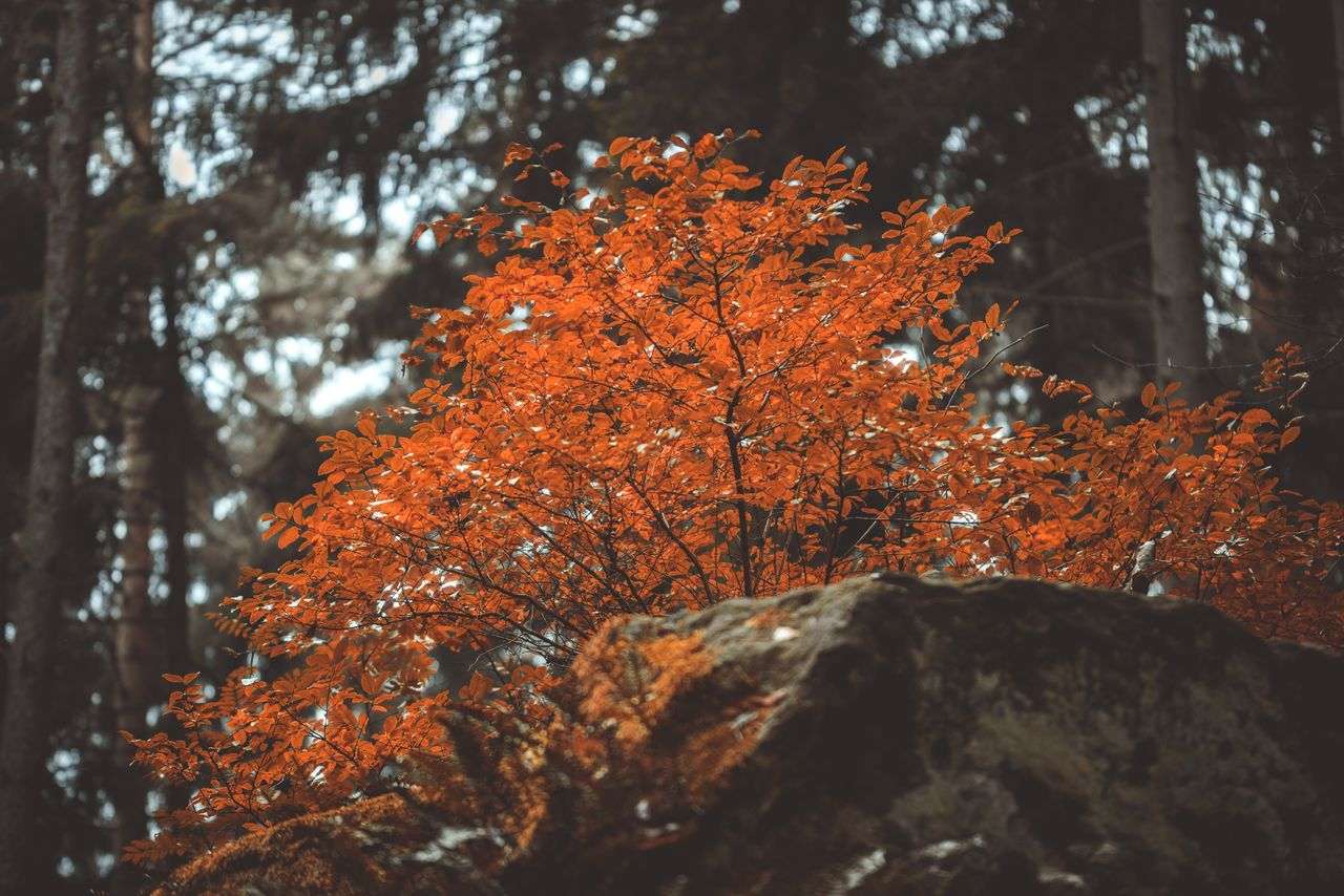 Close-up of autumnal tree growing in forest
