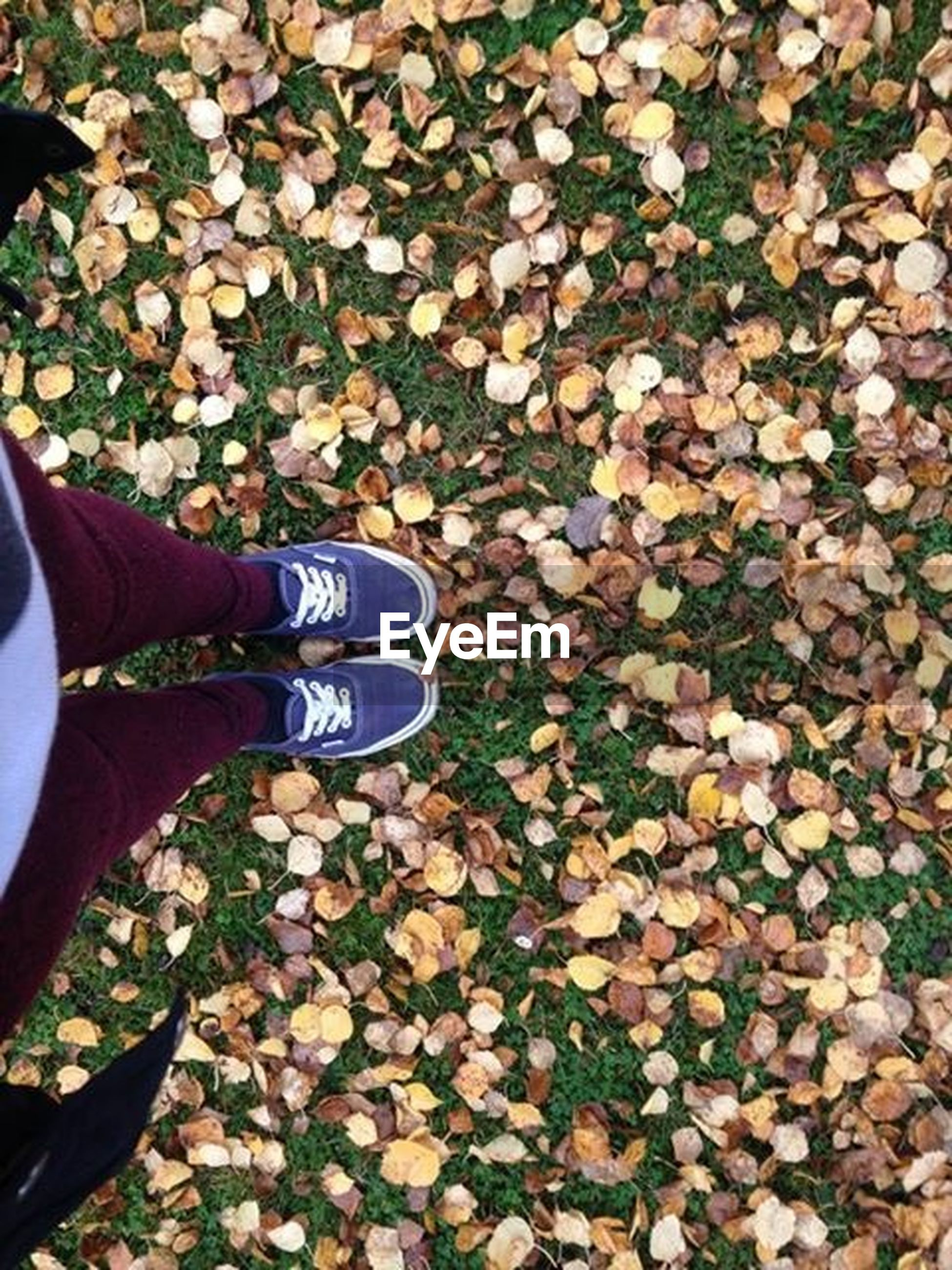 low section, person, shoe, personal perspective, footwear, high angle view, leaf, standing, lifestyles, human foot, autumn, field, part of, leisure activity, unrecognizable person, fallen, dry