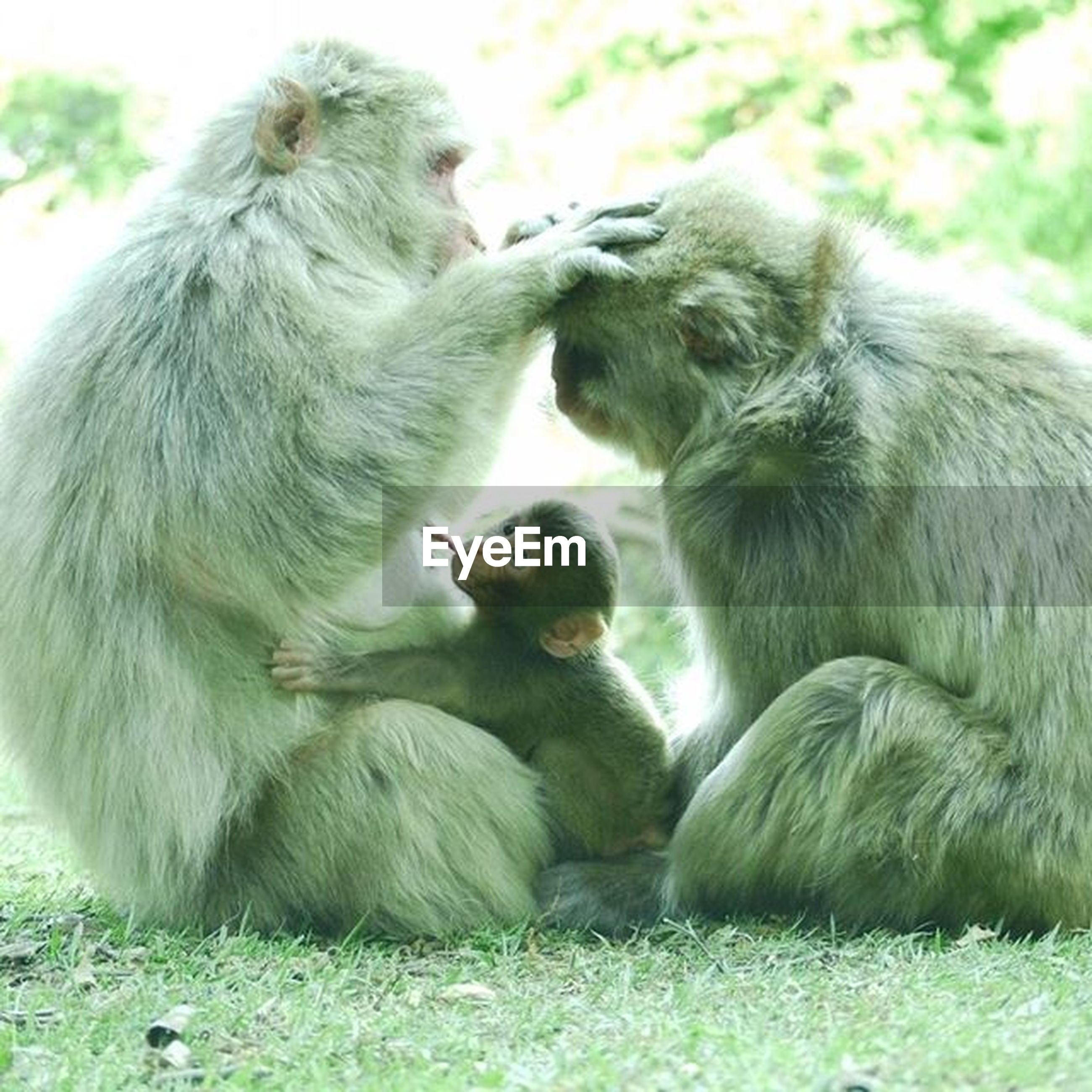 animal themes, togetherness, animal family, animals in the wild, wildlife, young animal, two animals, mammal, monkey, three animals, relaxation, nature, outdoors, medium group of animals, young bird, day, four animals, sitting, no people