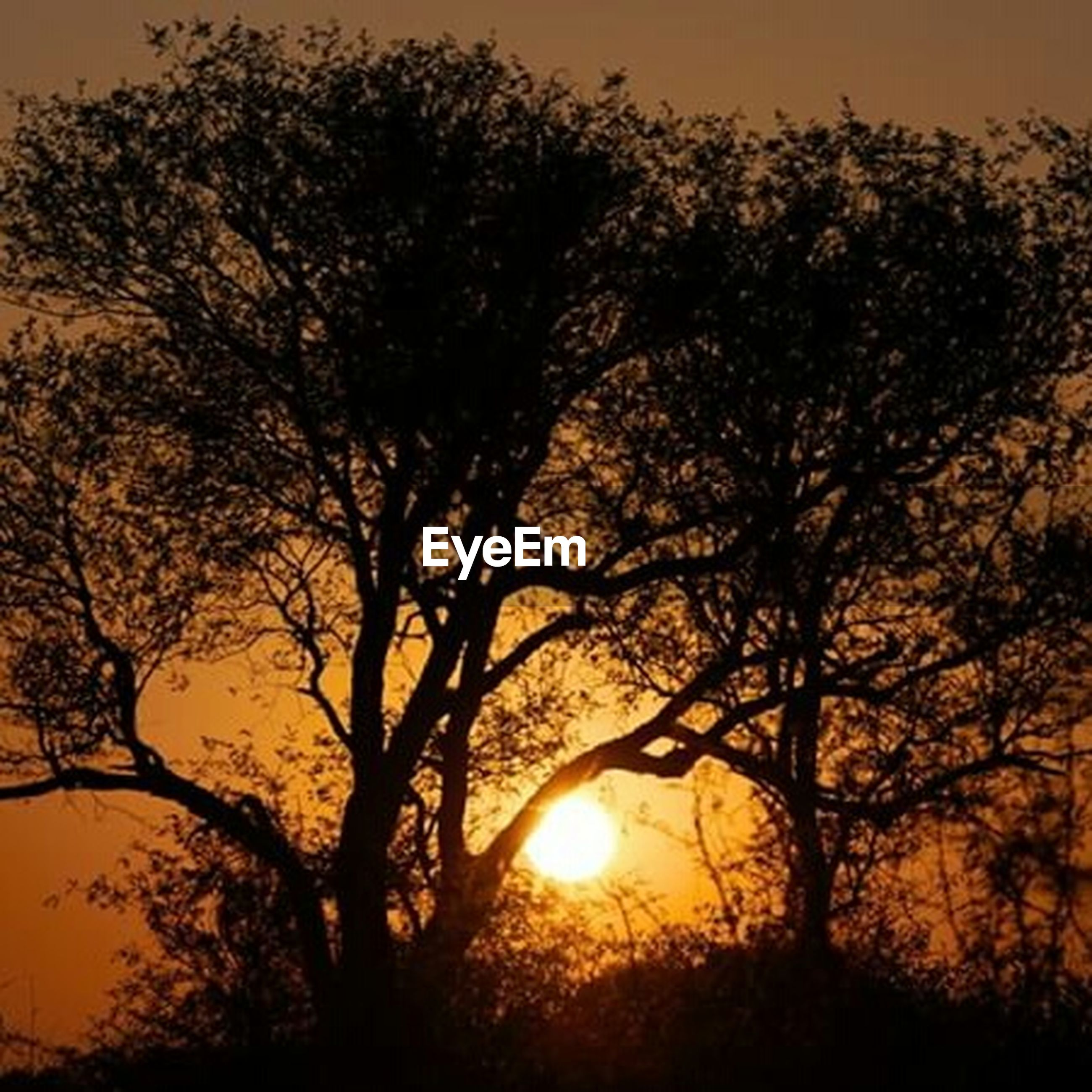 sunset, tree, sun, nature, back lit, no people, beauty in nature, silhouette, branch, outdoors, sky