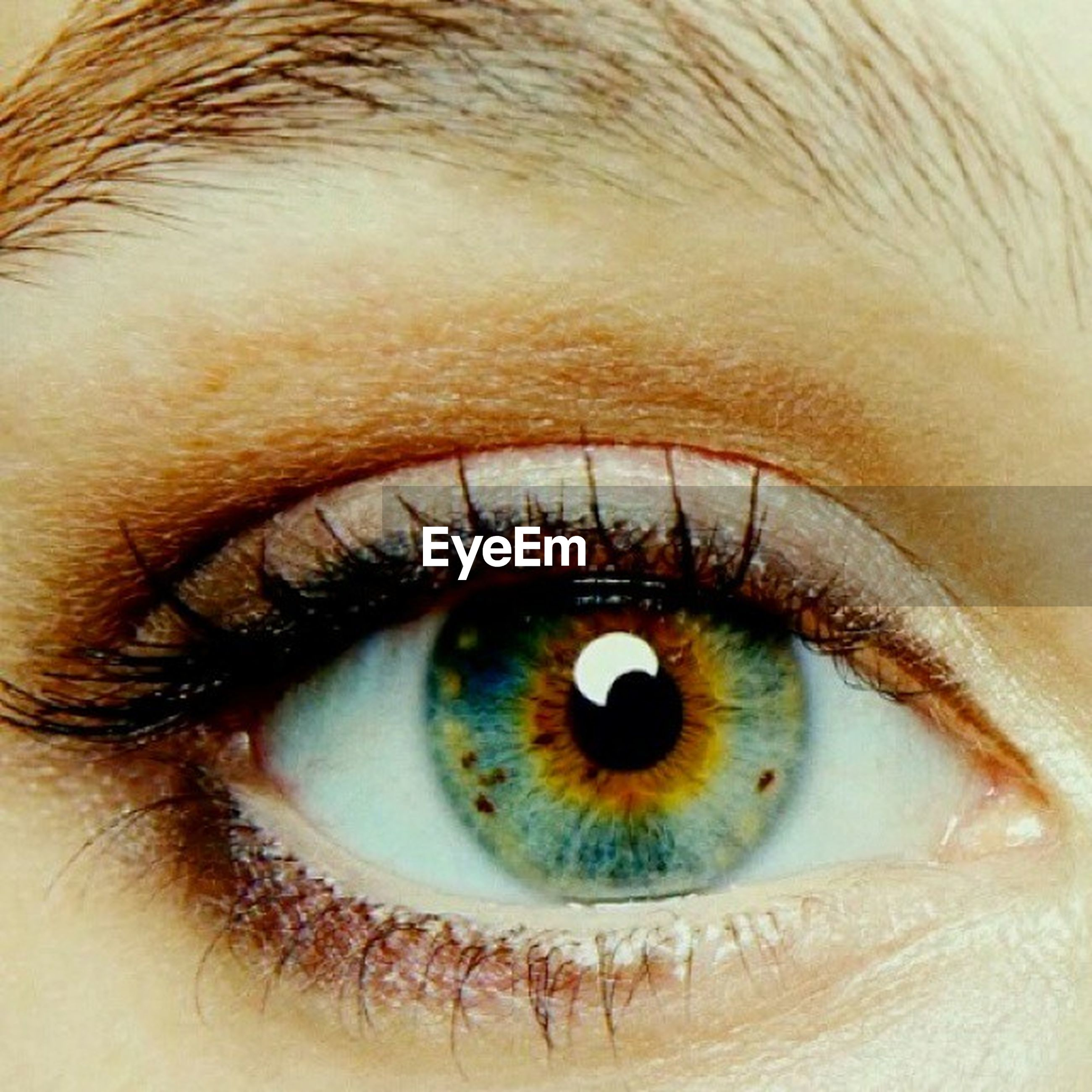 human eye, eyelash, eyesight, sensory perception, close-up, extreme close-up, iris - eye, full frame, portrait, looking at camera, eyeball, extreme close up, part of, vision, backgrounds, eyebrow, human skin