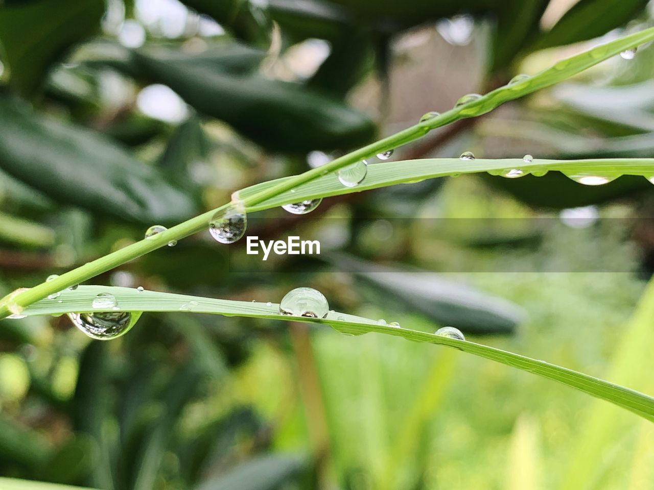 drop, water, green color, growth, plant, focus on foreground, close-up, wet, nature, day, beauty in nature, plant part, no people, leaf, freshness, blade of grass, selective focus, fragility, vulnerability, dew, outdoors, purity, raindrop, rain, rainy season