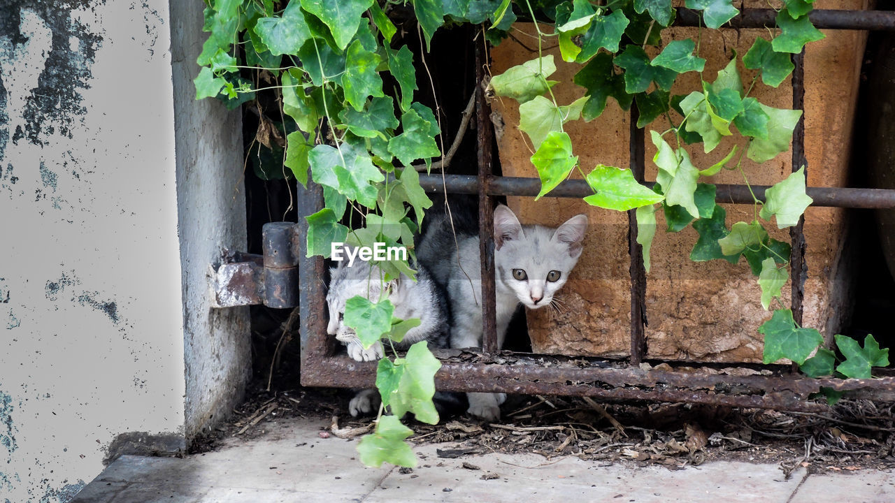 mammal, animal themes, domestic, animal, one animal, pets, domestic animals, feline, portrait, cat, vertebrate, leaf, plant part, plant, domestic cat, looking at camera, no people, day, nature, growth, outdoors, whisker