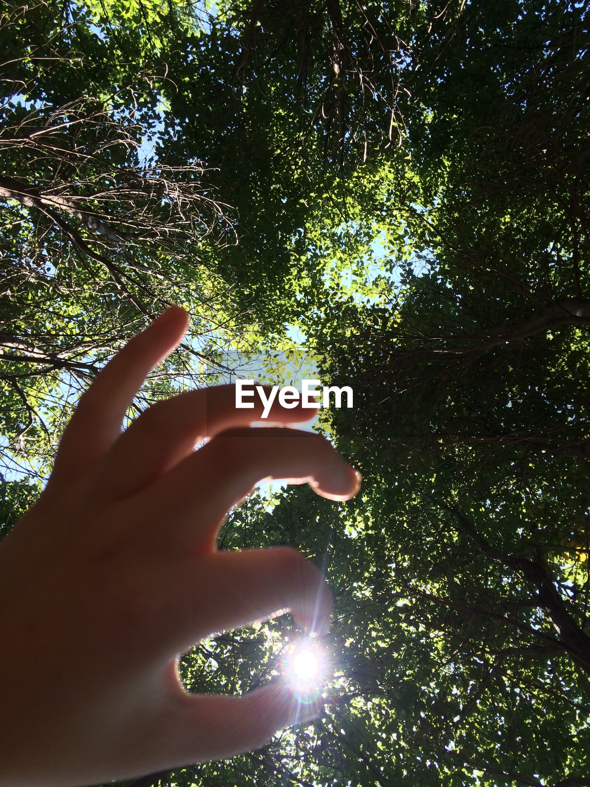 tree, person, low angle view, part of, sunlight, sun, human finger, cropped, growth, nature, sunbeam, branch, beauty in nature, lens flare, personal perspective, outdoors, silhouette